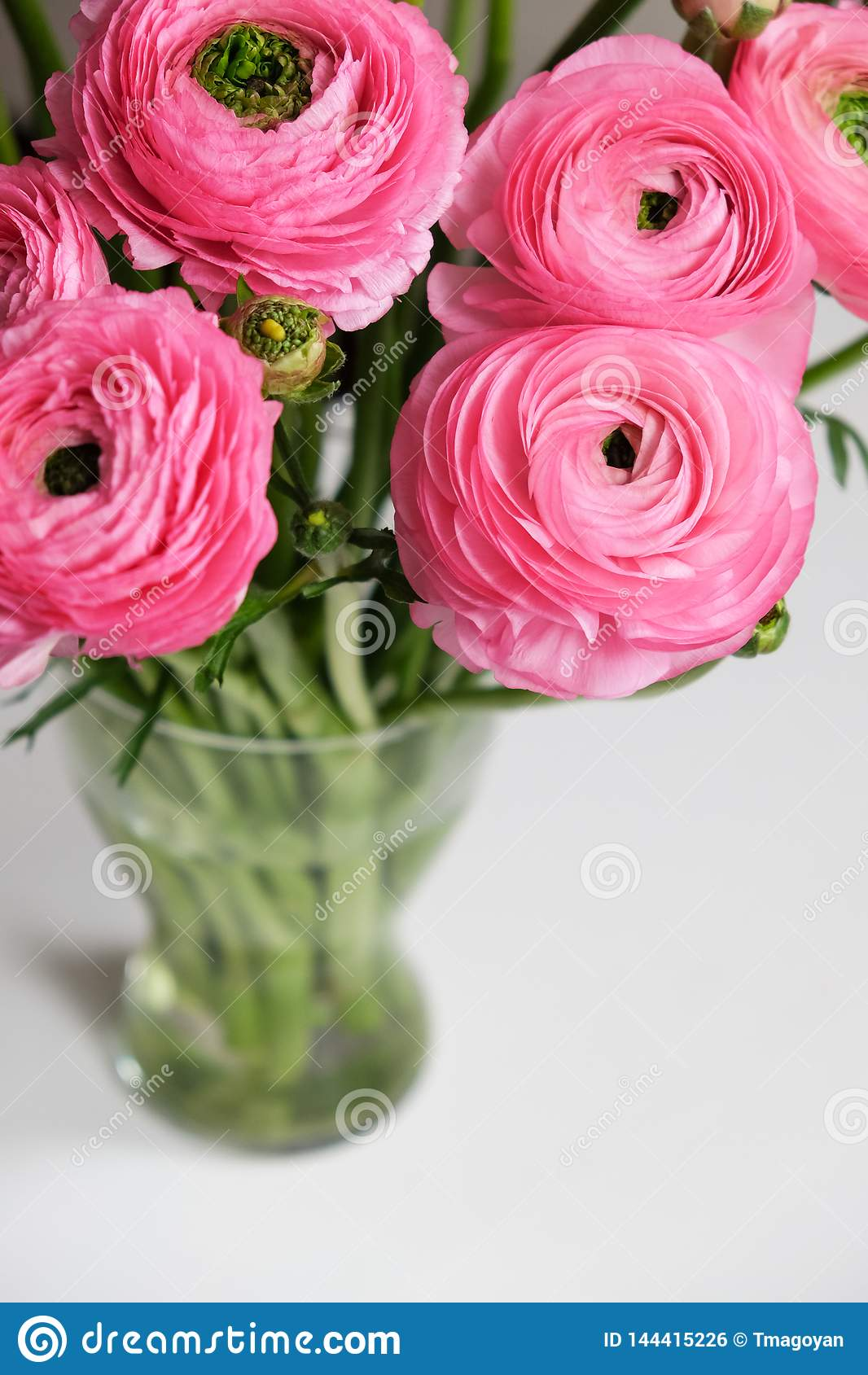 Ramo rosado del ranúnculo en florero de cristal transparente en la tabla blanca Primer Para la tarjeta de felicitación colorida,