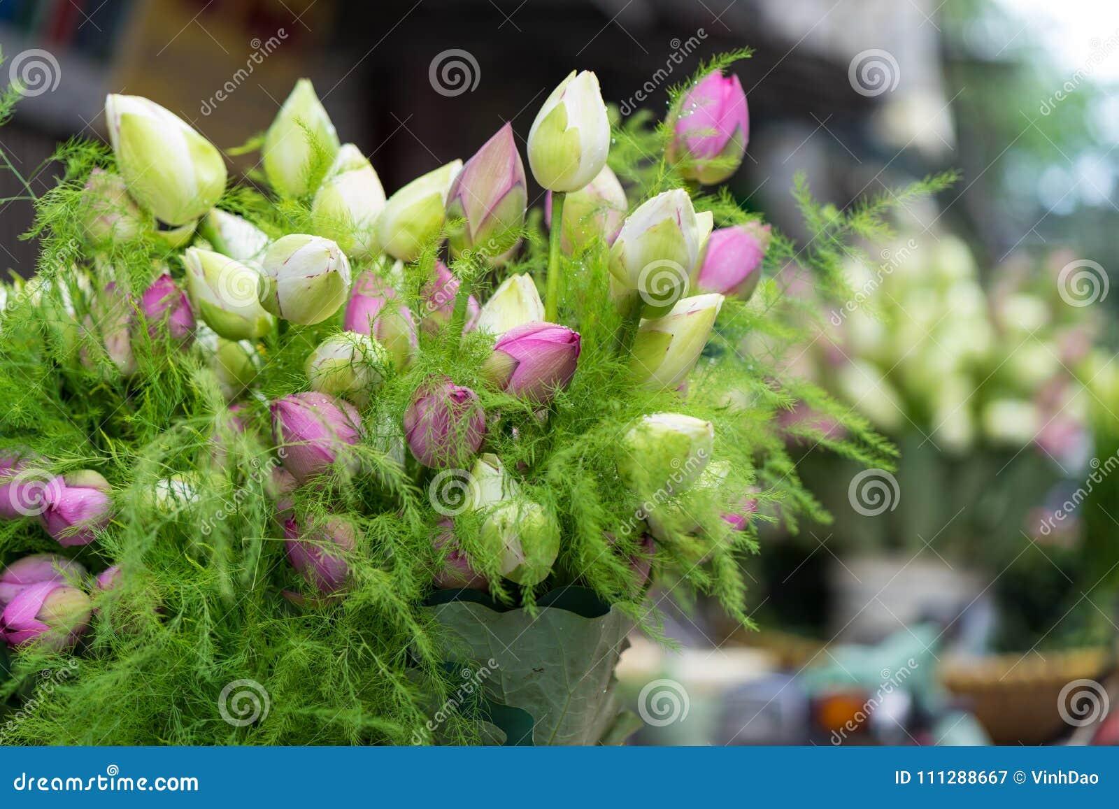 Ramo Rosado Y Verde Decorativo De La Flor De Loto Imagen De Archivo