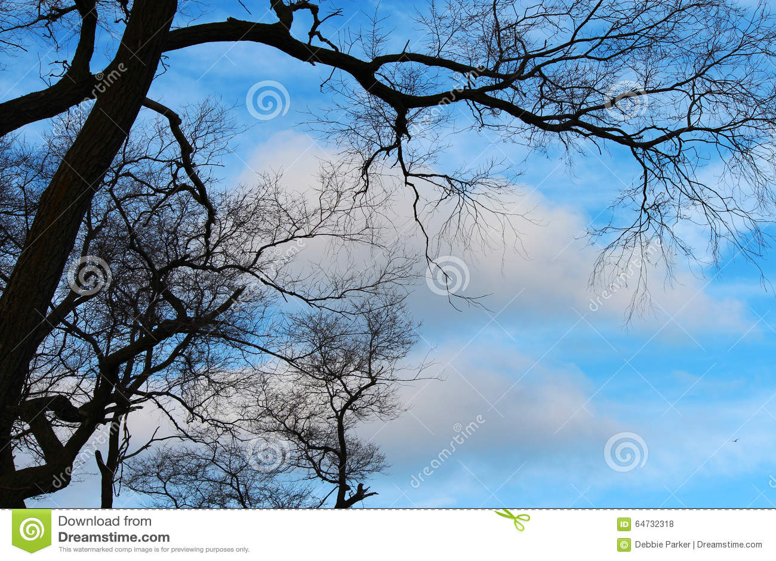 Ramos contra o céu azul