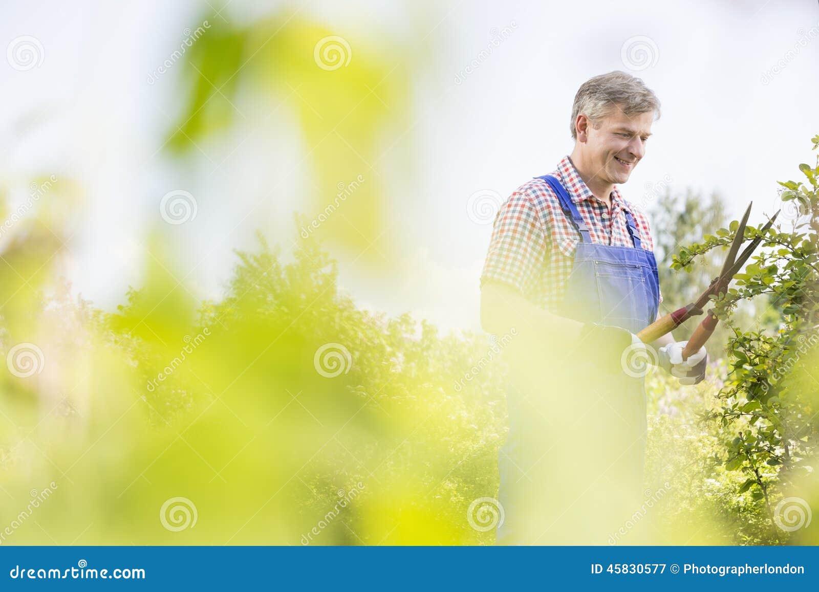 Ramos de árvore de sorriso do aparamento do jardineiro no berçário da planta