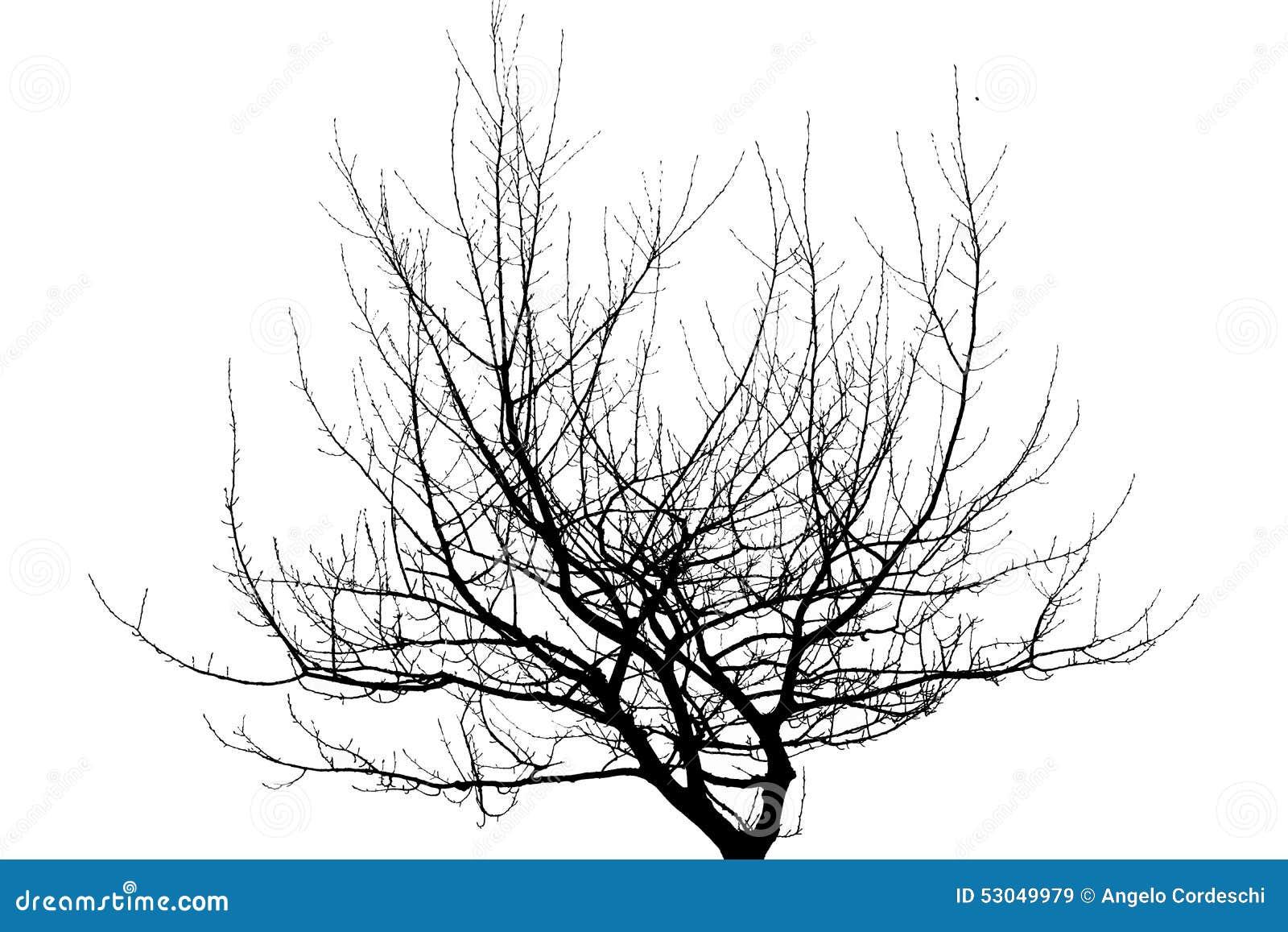 Ramos de árvore secos isolados no fundo branco
