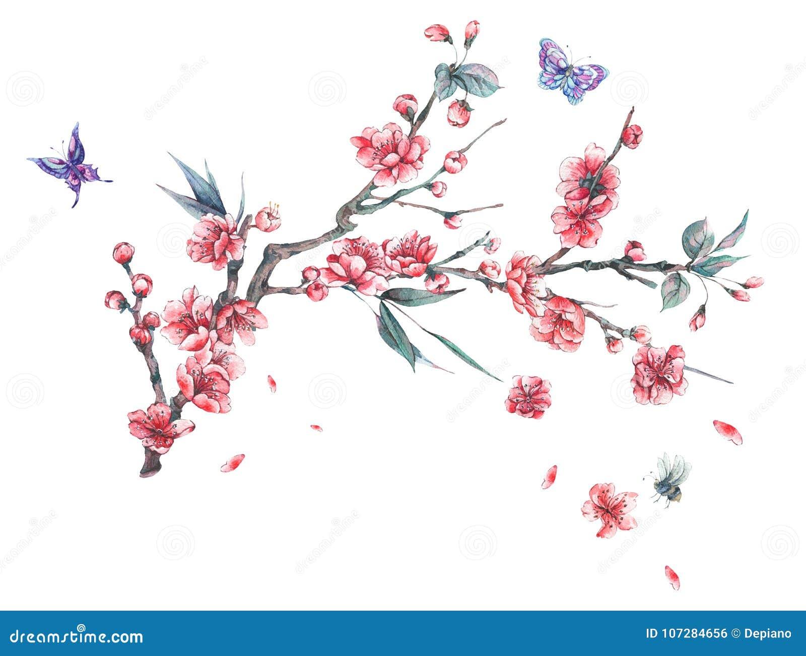 Ramos de florescência cor-de-rosa da mola da aquarela da cereja