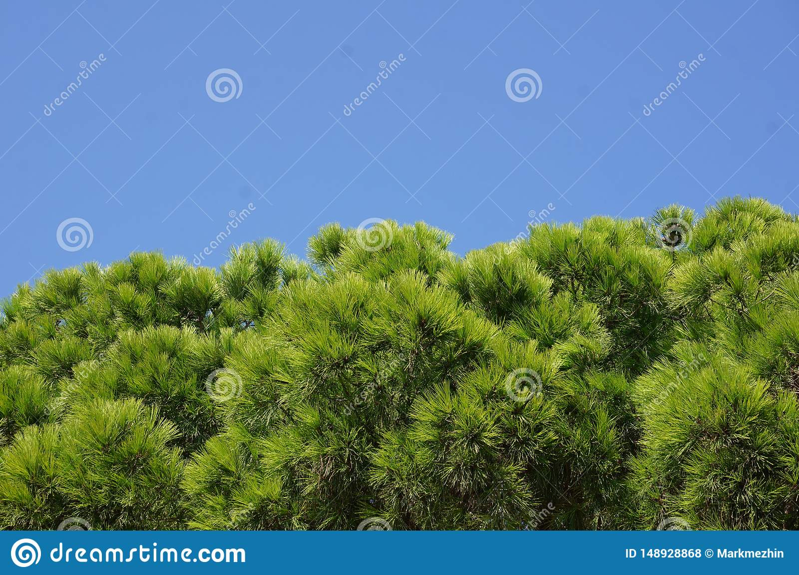 Ramos de ?rvore verdes contra o c?u azul