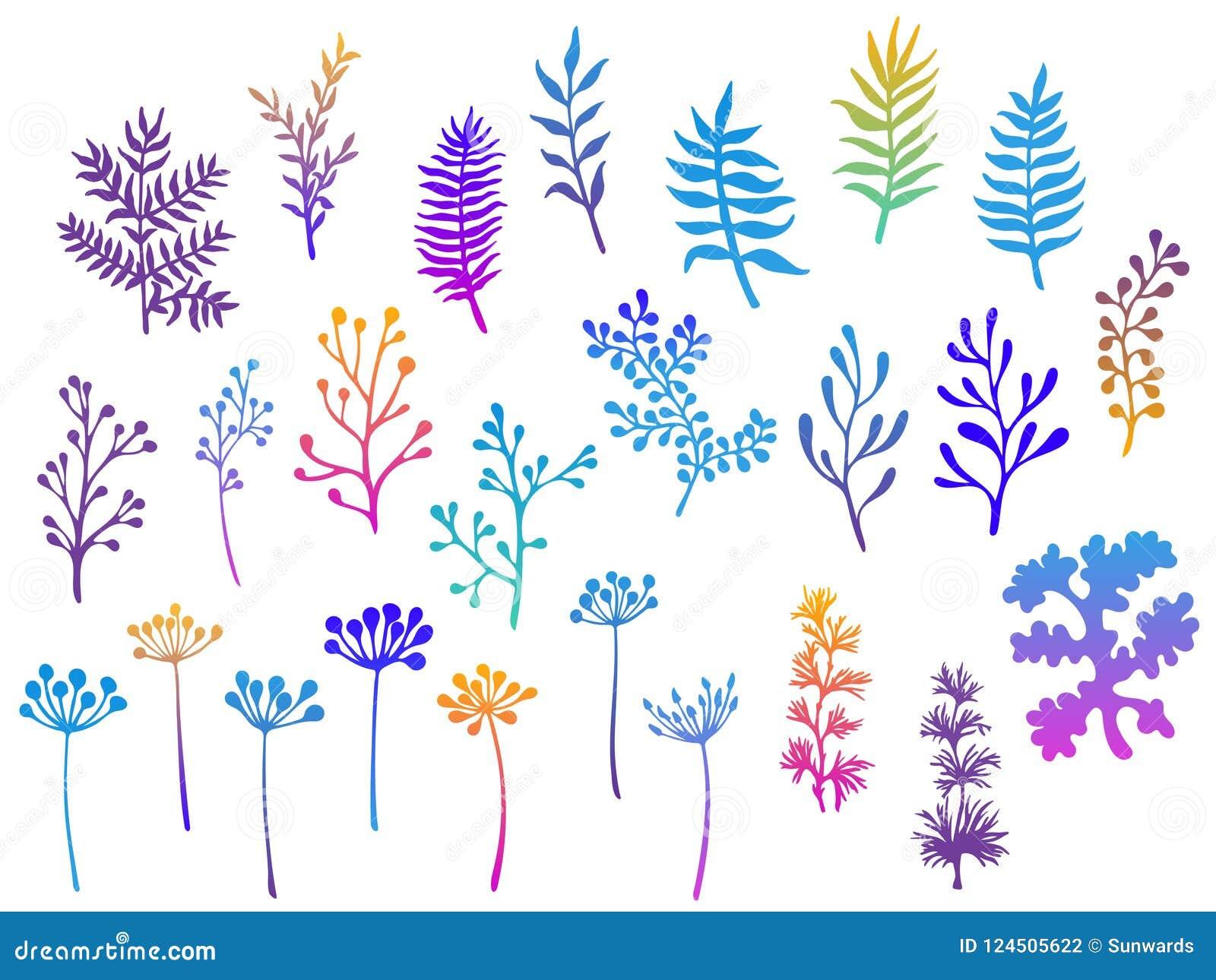 Ramos do salgueiro e de palmeira, galhos da samambaia, musgo do líquene, visco, ervas saborosos da grama, ilustrações do vetor da