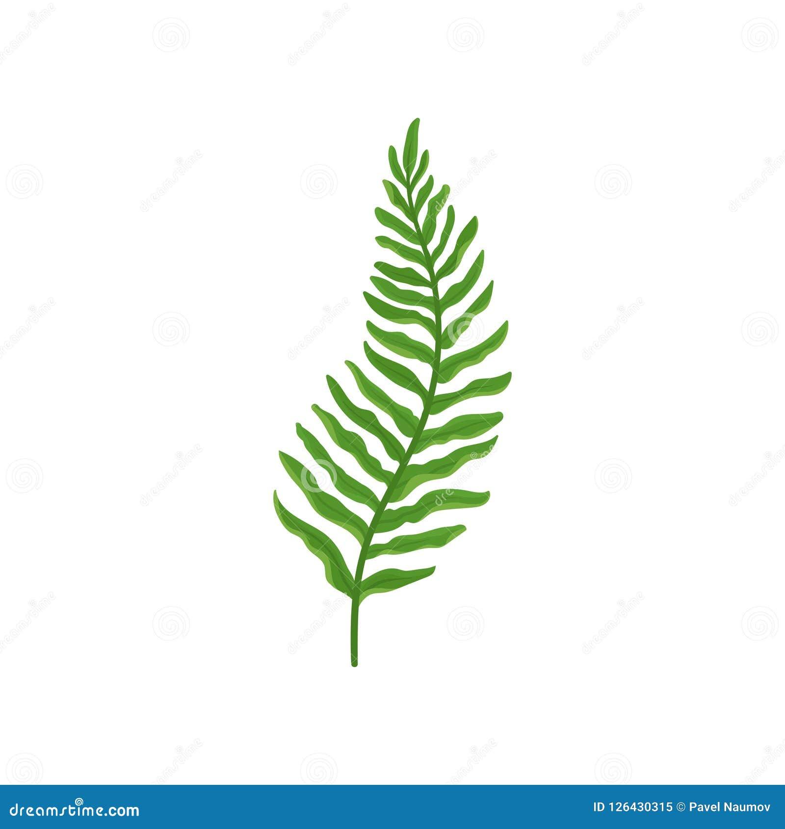 Ramoscello verde della felce con le foglie Pianta selvatica della foresta con le foglie verde intenso Flora naturale Progettazion