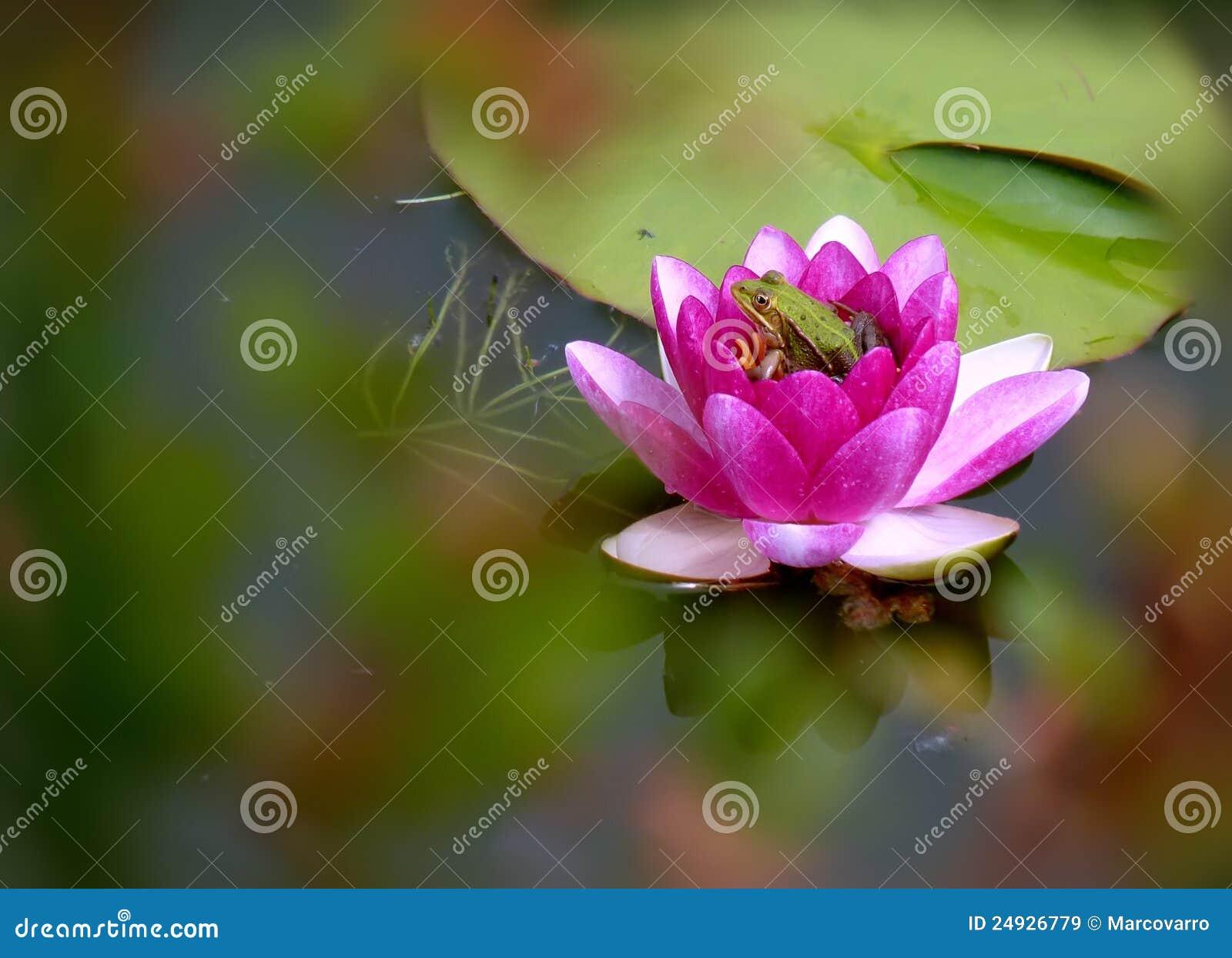 Dorable Flor En Uña Foto - Ideas de Pintar de Uñas - ayagenesis.info