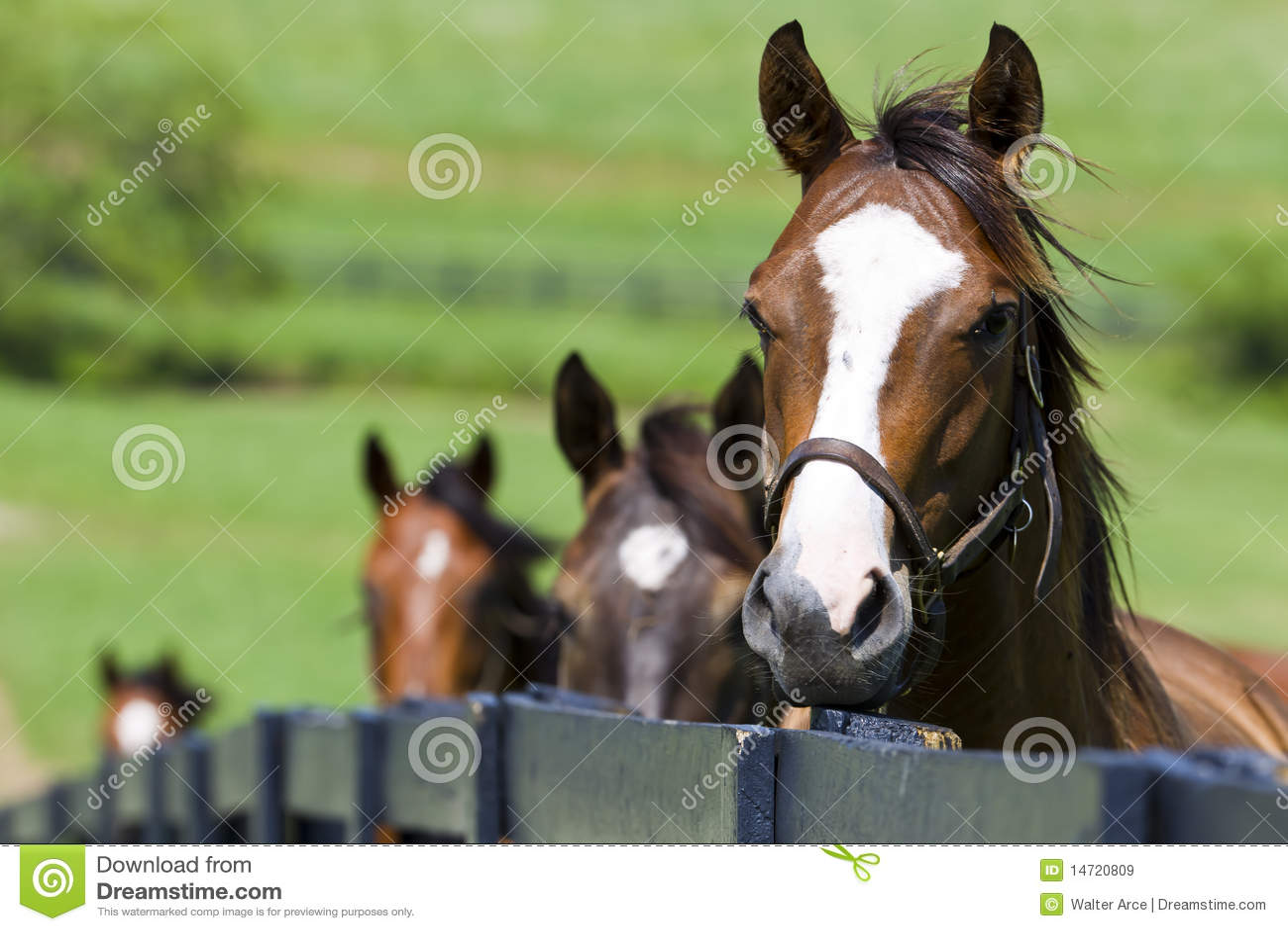 Ranch del cavallo
