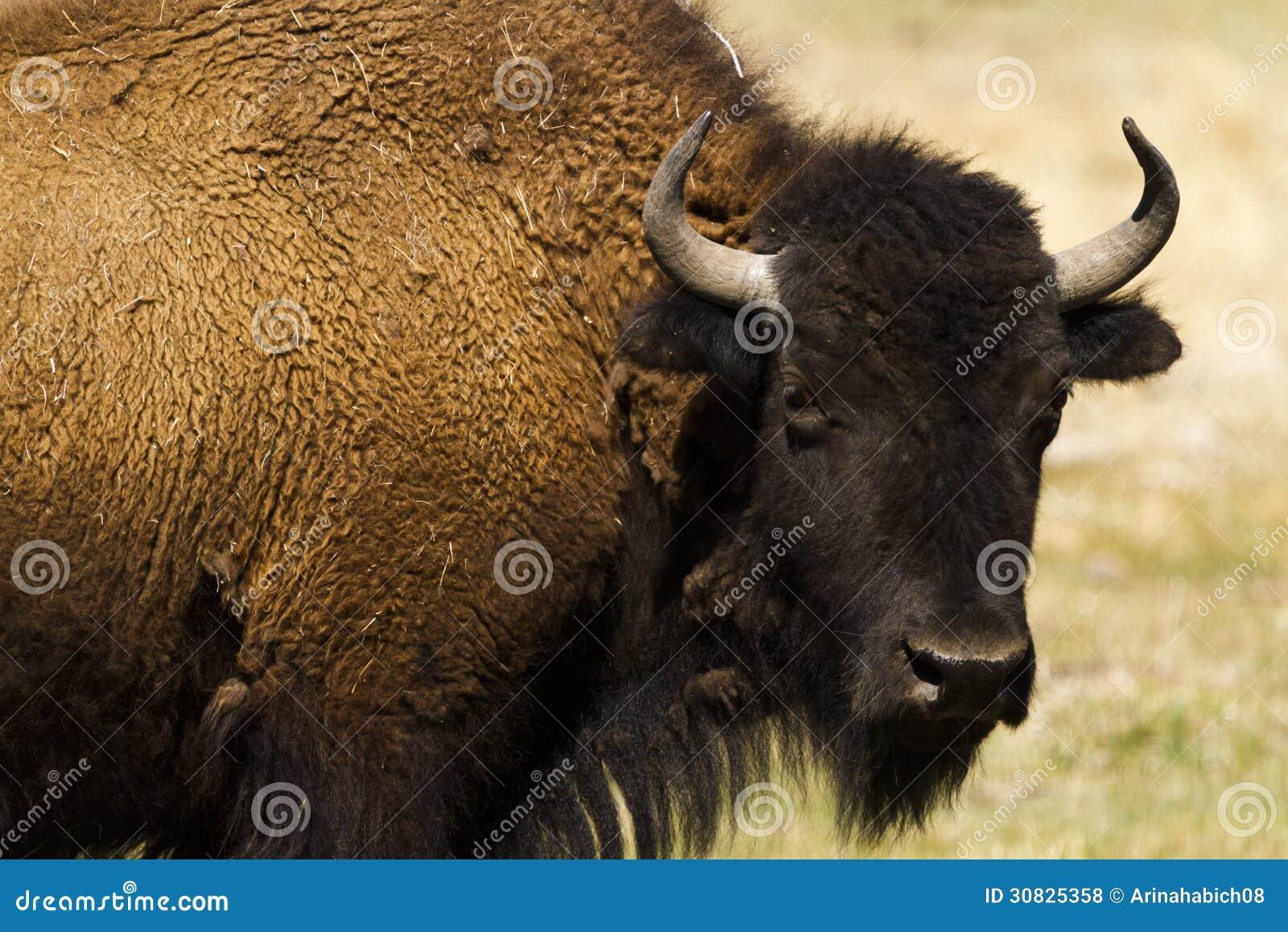 Ranch della Buffalo