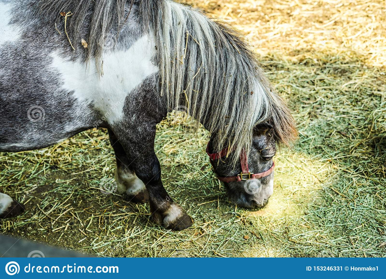 Ranch pony image