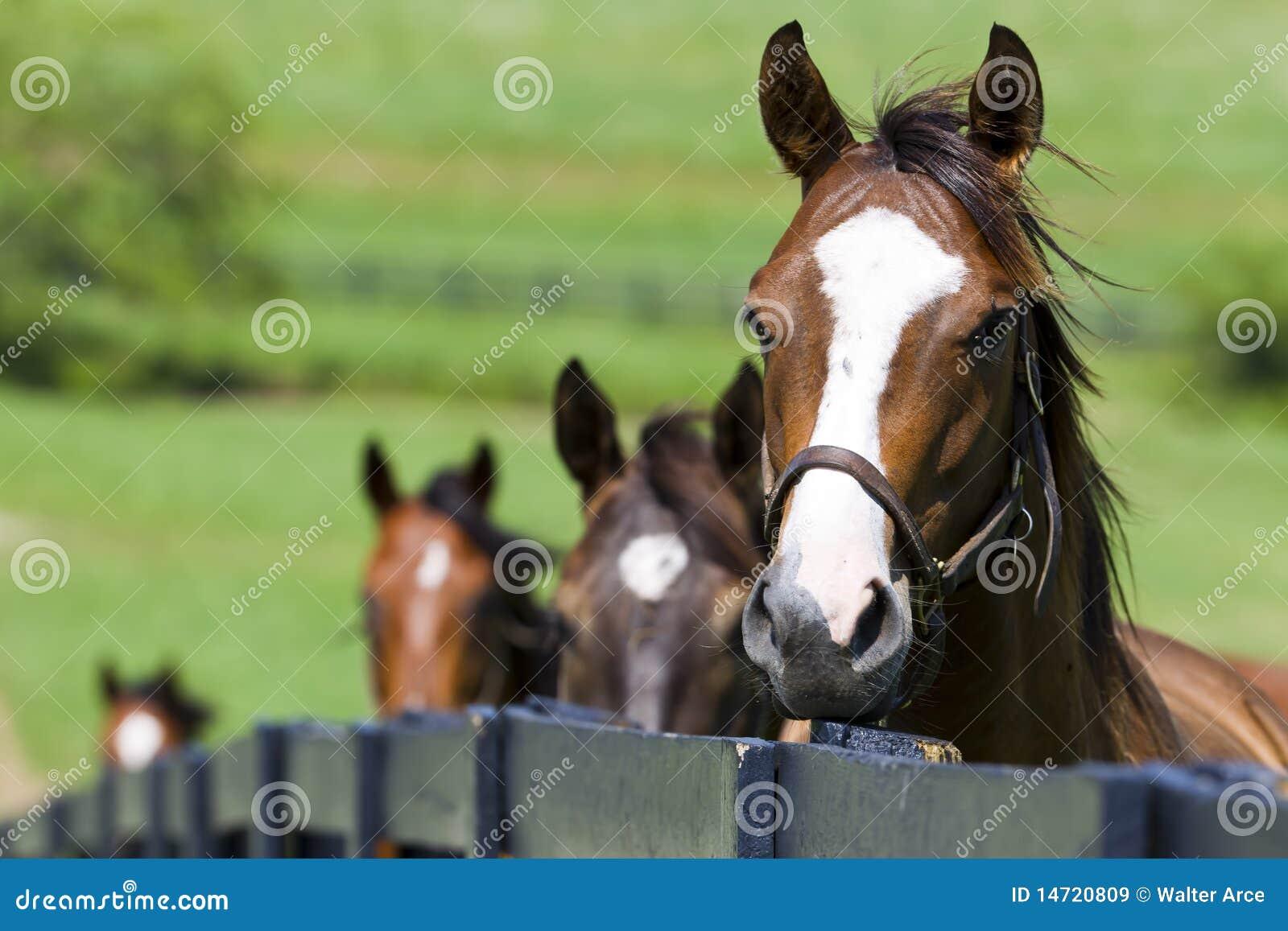 Rancho do cavalo