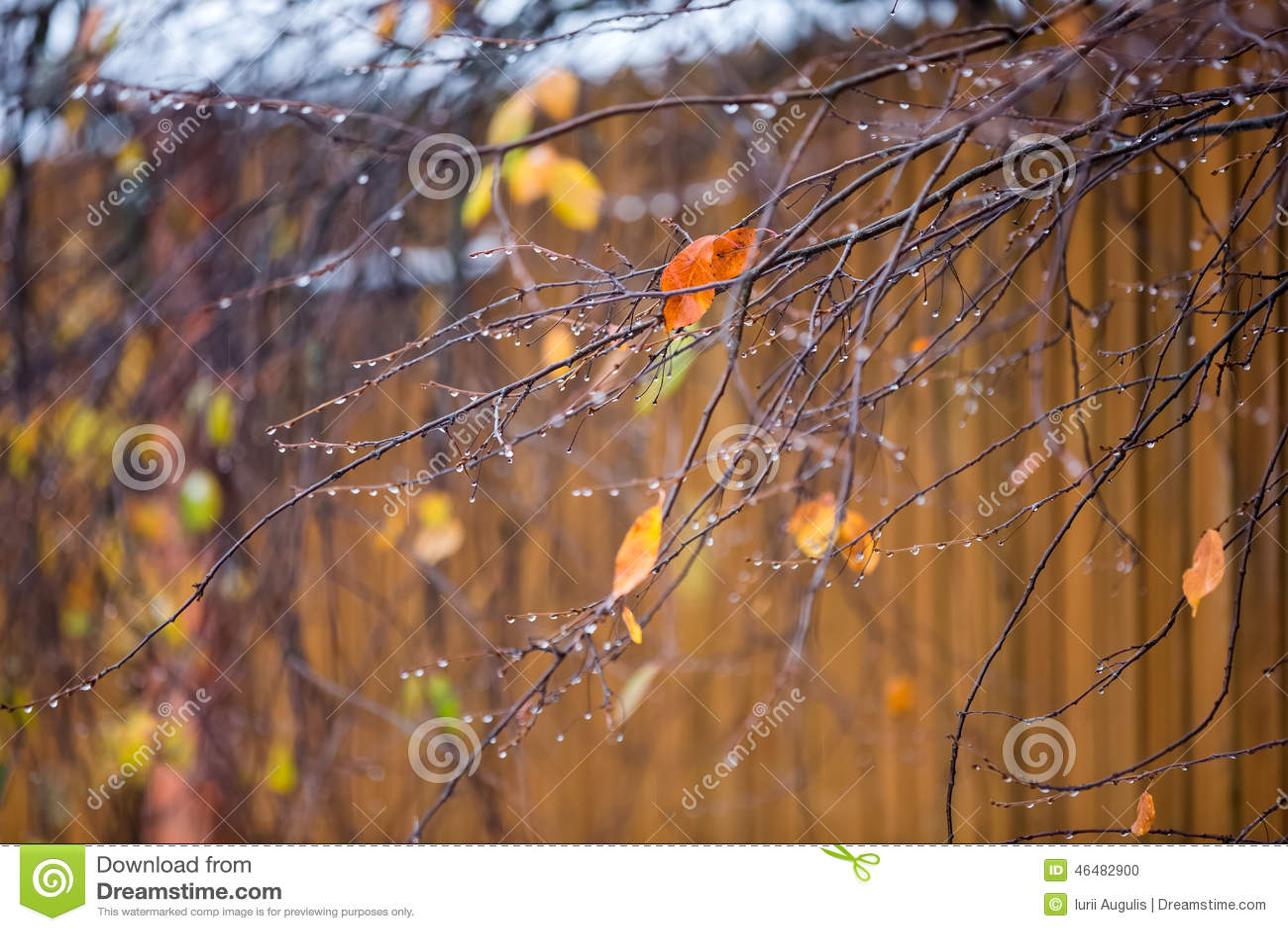 Ranchos De Arbustos Y De árboles Con Las Hojas Amarillas Y De La ...