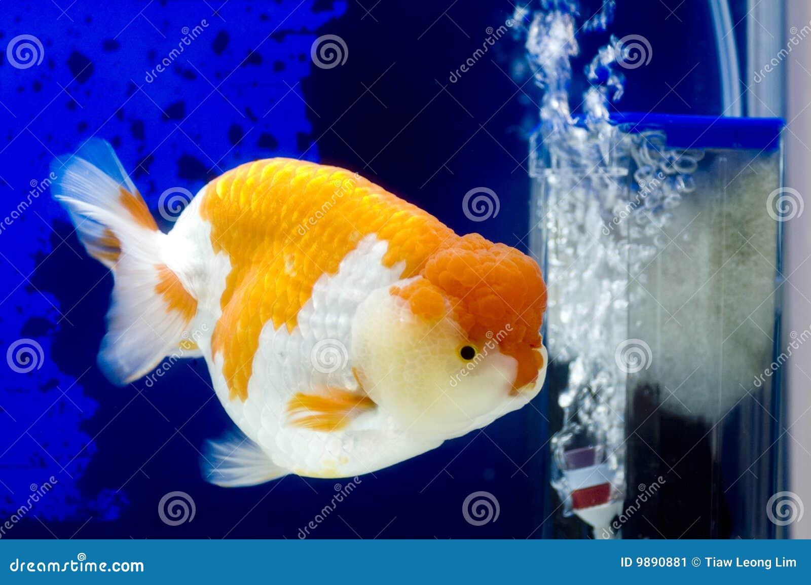 Neumanns Park Restaurant Bild: Fischbecken Bilder und Bewertungen zu Neumanns Park Restaurant vergleichen und beim Testsieger HolidayCheck mit.