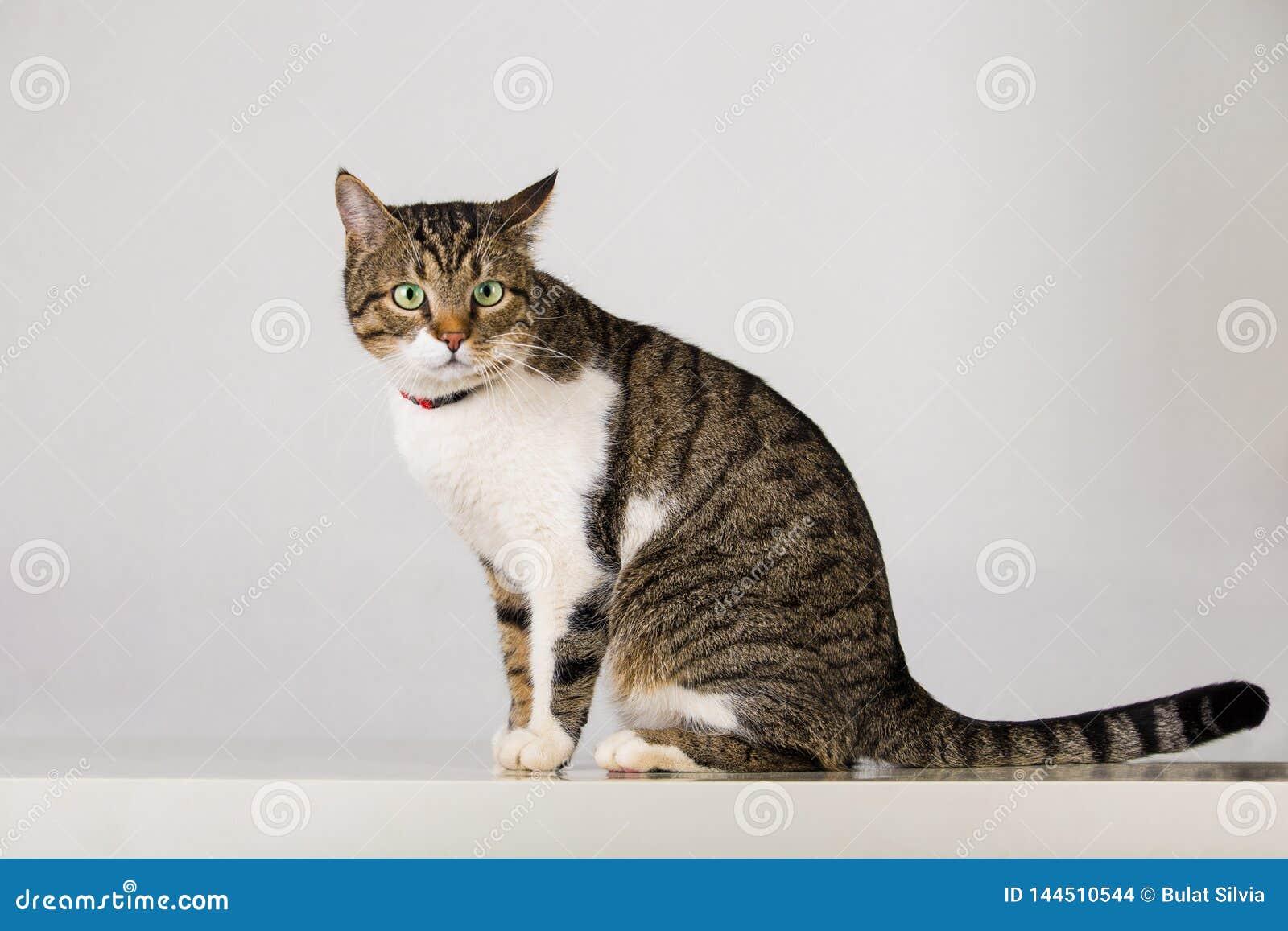 Randig katt som ser uppmärksam