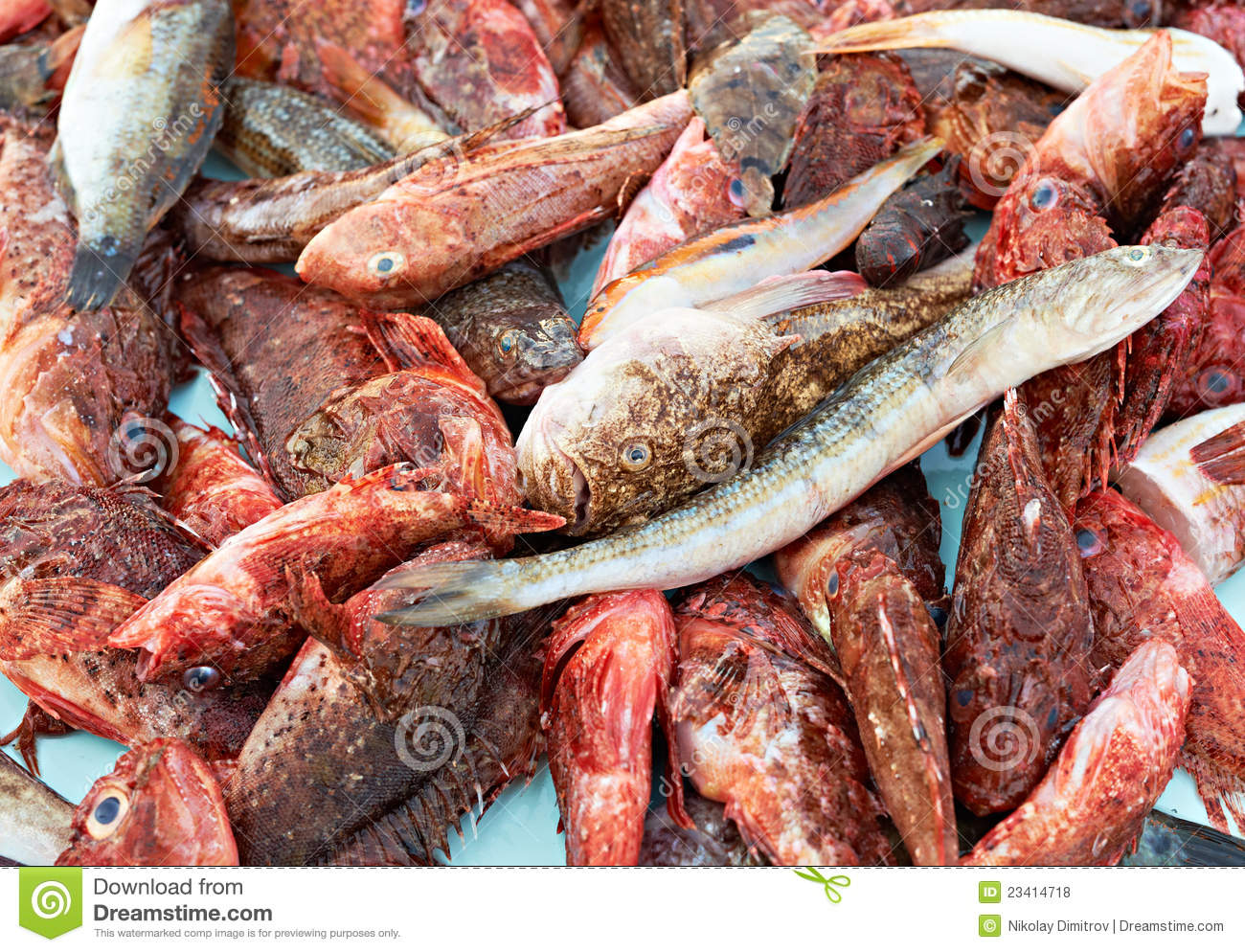 Random fresh fish for sale royalty free stock photos for Koi food for sale