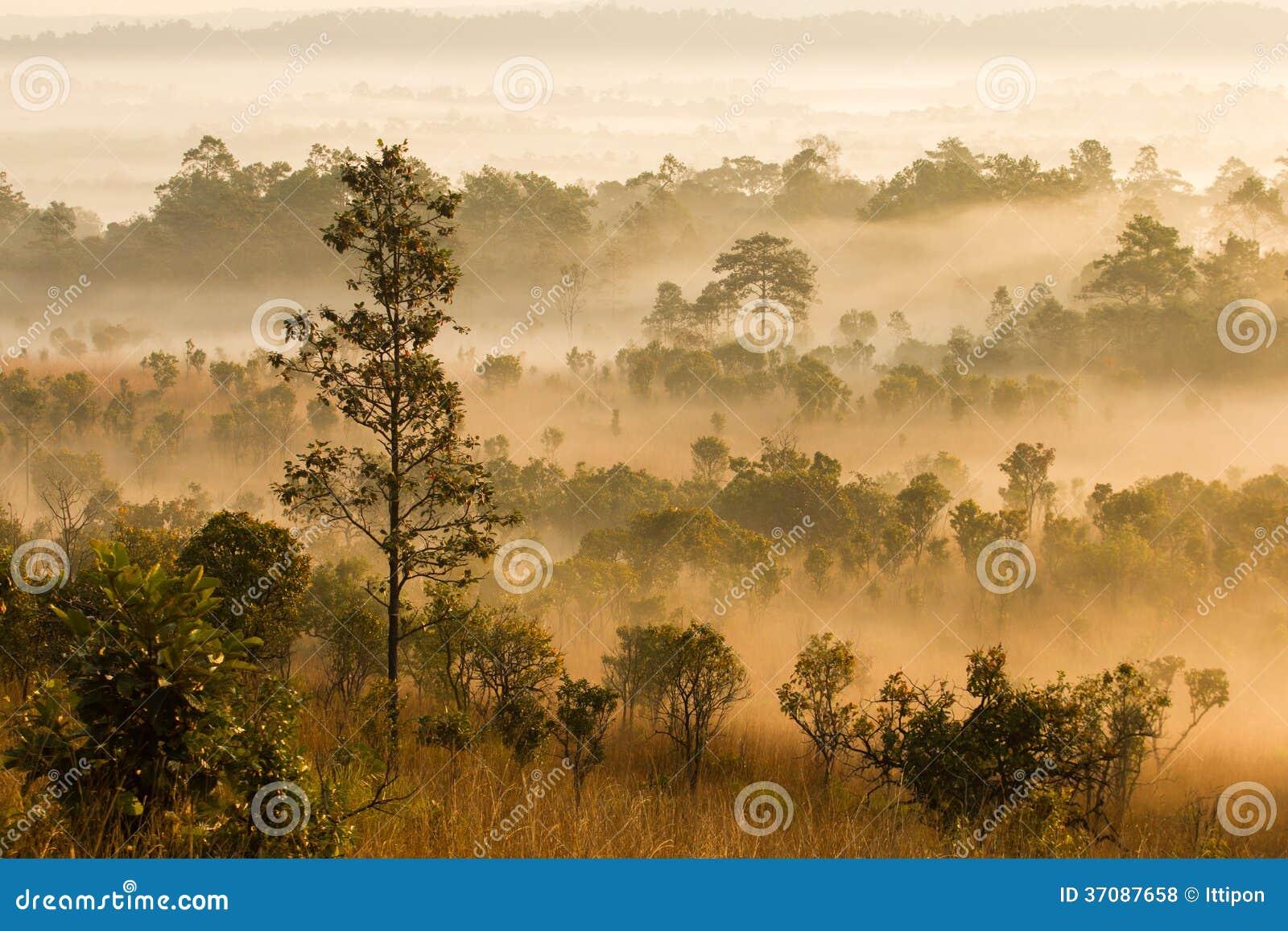Download Ranek Mgły Pokrywy Góra I Drzewo Zdjęcie Stock - Obraz złożonej z sunlight, scenics: 37087658