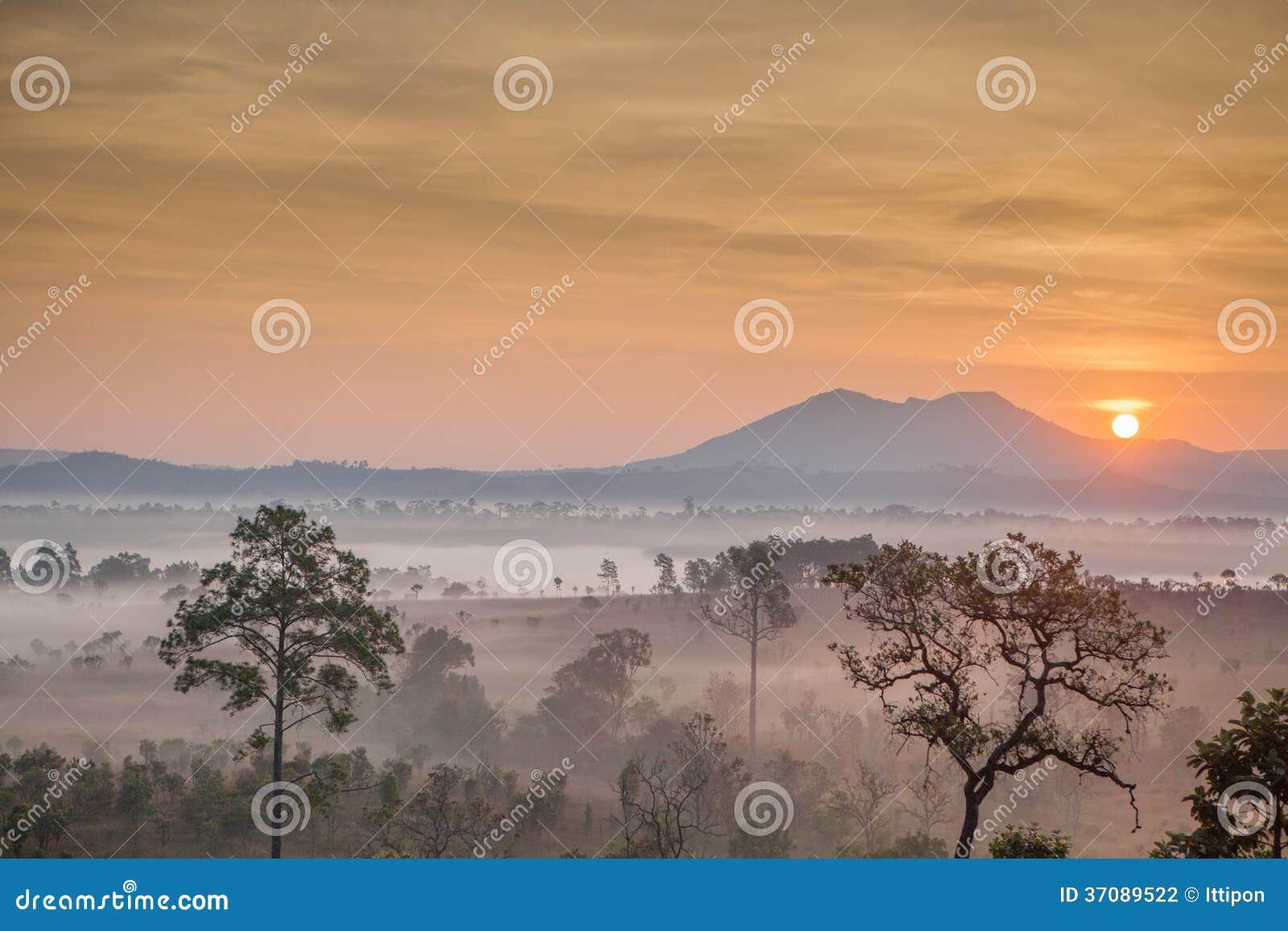 Download Ranek Mgły Pokrywy Góra I Drzewo Zdjęcie Stock - Obraz złożonej z scena, szczyt: 37089522