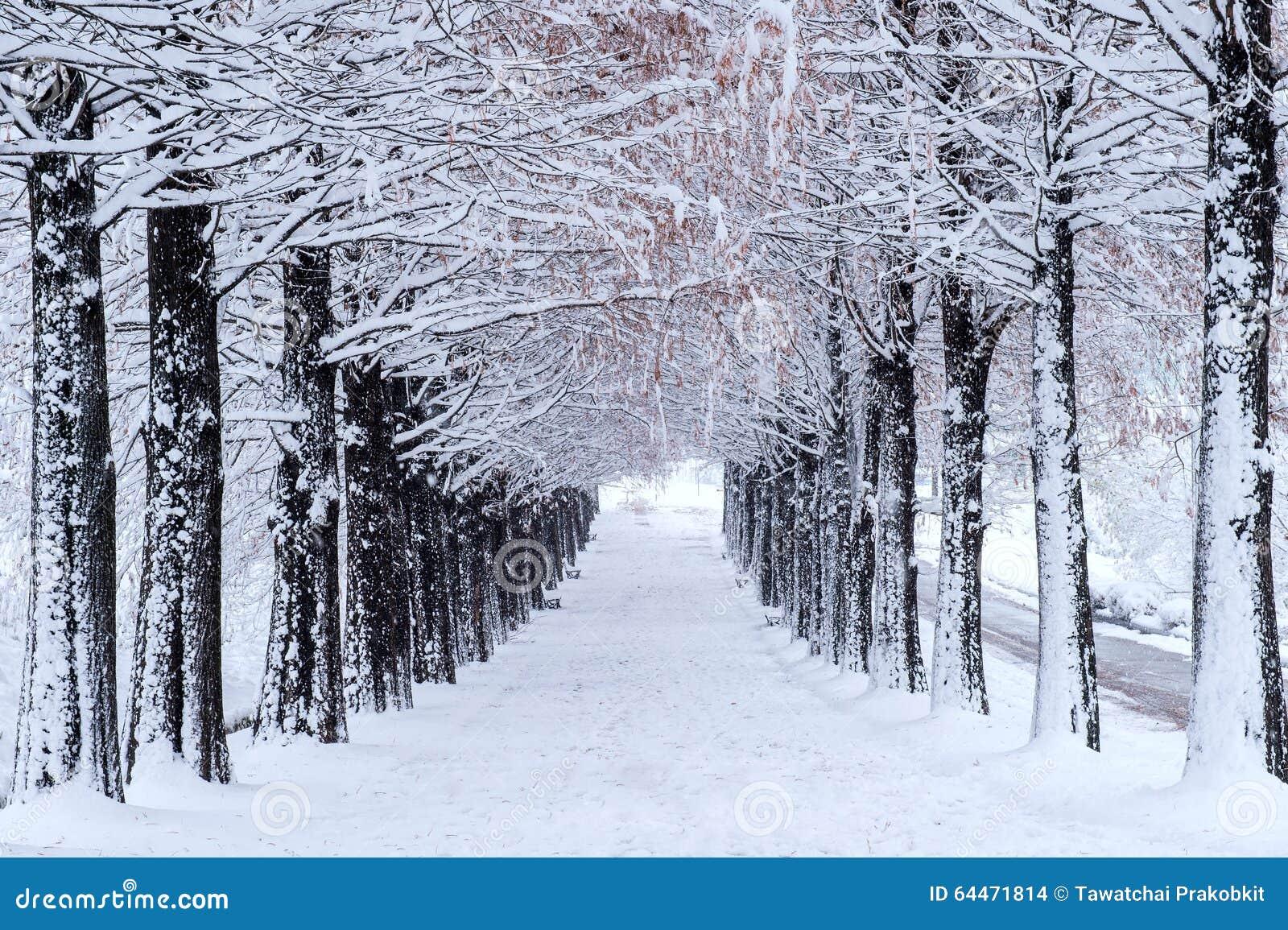 Rangée des arbres en hiver avec la neige en baisse