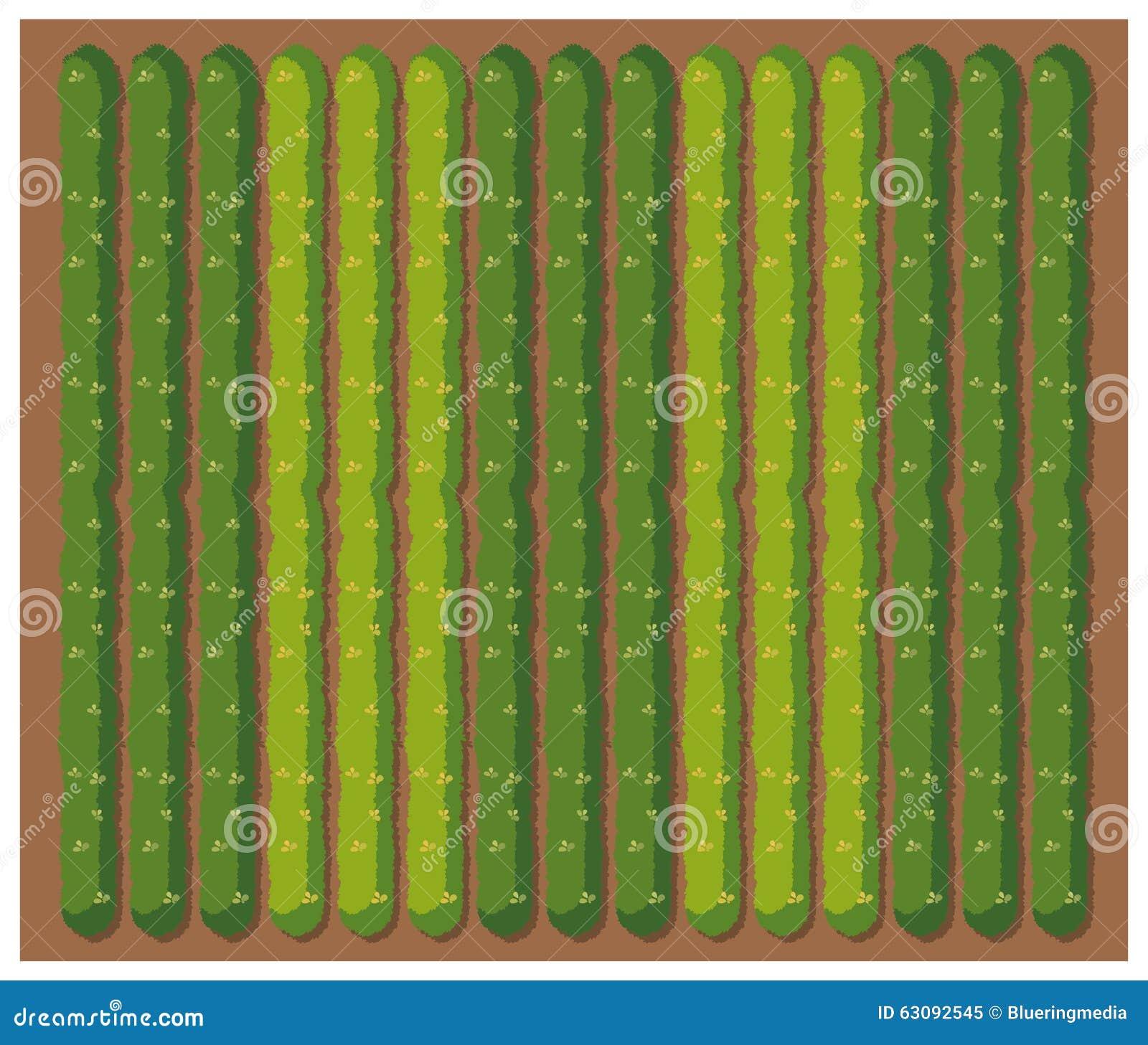 Download Rangée Des Légumes Du Topview Illustration de Vecteur - Illustration du vert, cartoon: 63092545