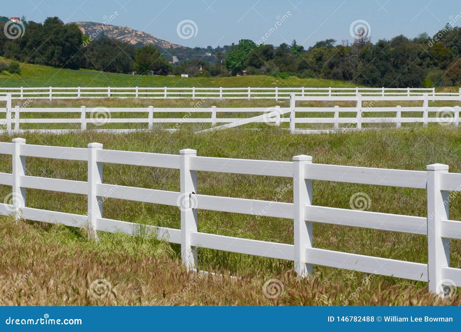 Rangées des barrières et du pâturage blancs