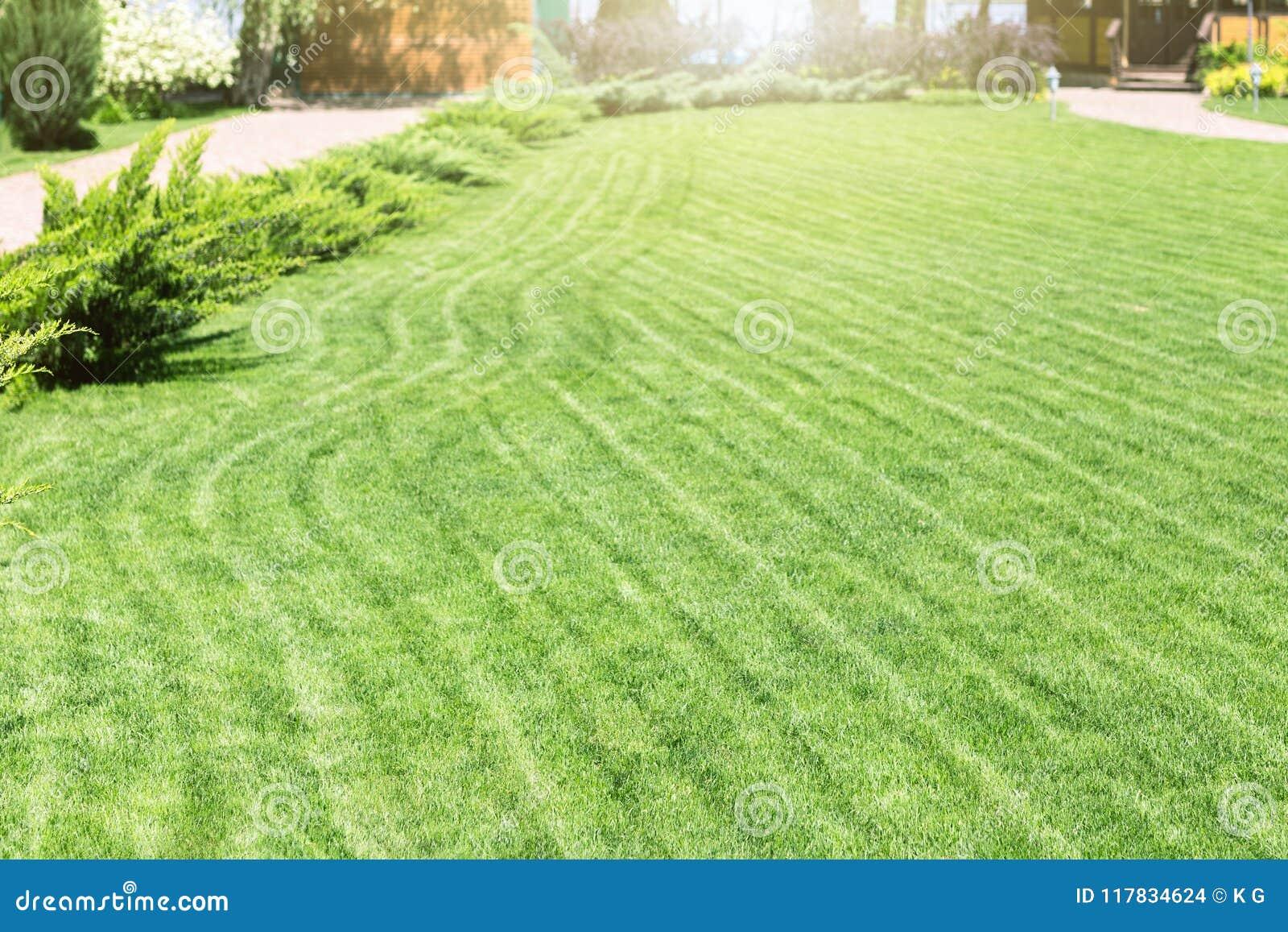 Rangées fraîchement fauchées de pelouse verte à la résidence de pays avec le pavillon Haie des cèdres frais Conception de paysage