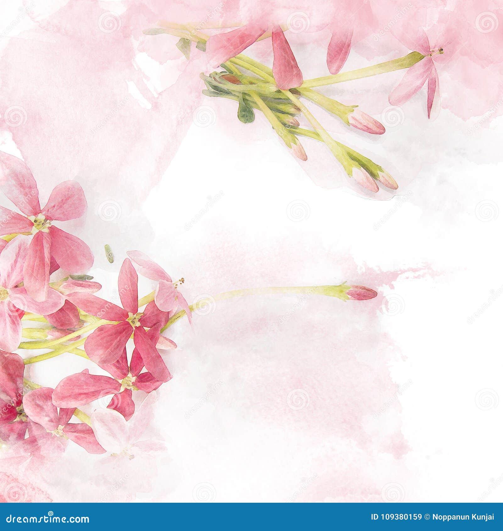 Rangun-Kriechpflanze Blume der Blüte rosa