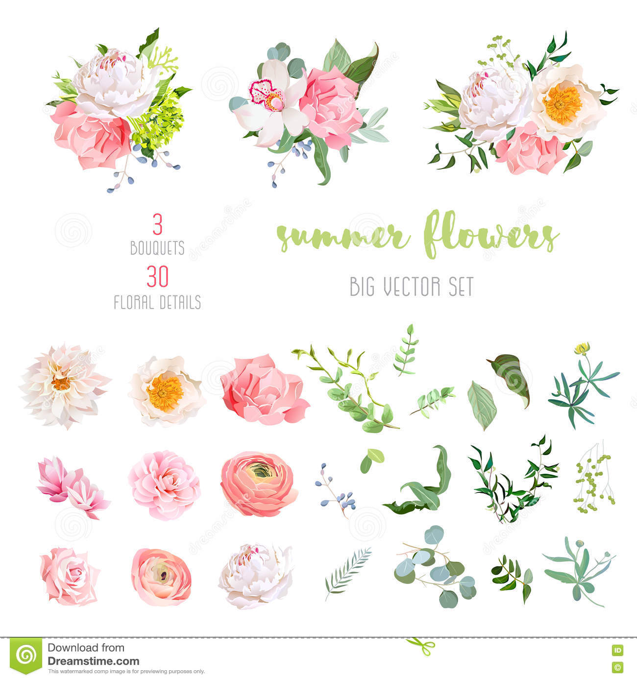Ranunculus, rose, peony, dahlia, camellia, carnation, orchid, hydrangea flowers and decorative plants big vector collection