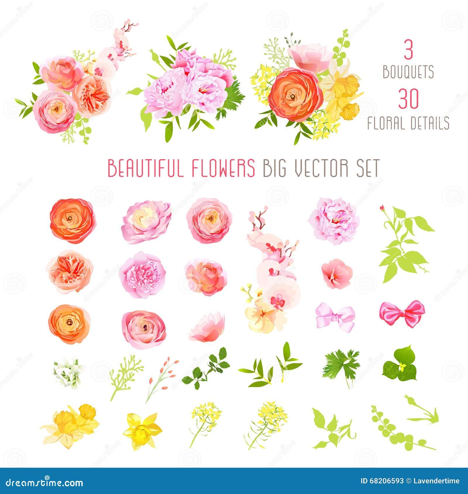 Ranunculus, wzrastał, peonia, narcyz, orchidea kwiaty i dekoracyjnych rośliien duża wektorowa kolekcja,
