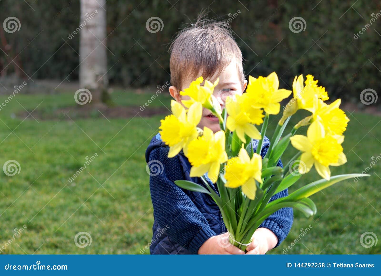 Rapaz pequeno tímido bonito na veste azul que guarda e que dá o ramalhete das flores amarelas brilhantes dos narcisos amarelos qu