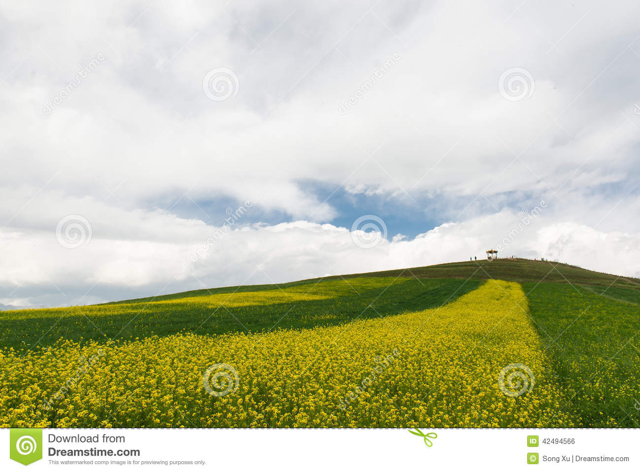 Of In Full Bloom Stock Photo Image Of Clouds High Area 42494566