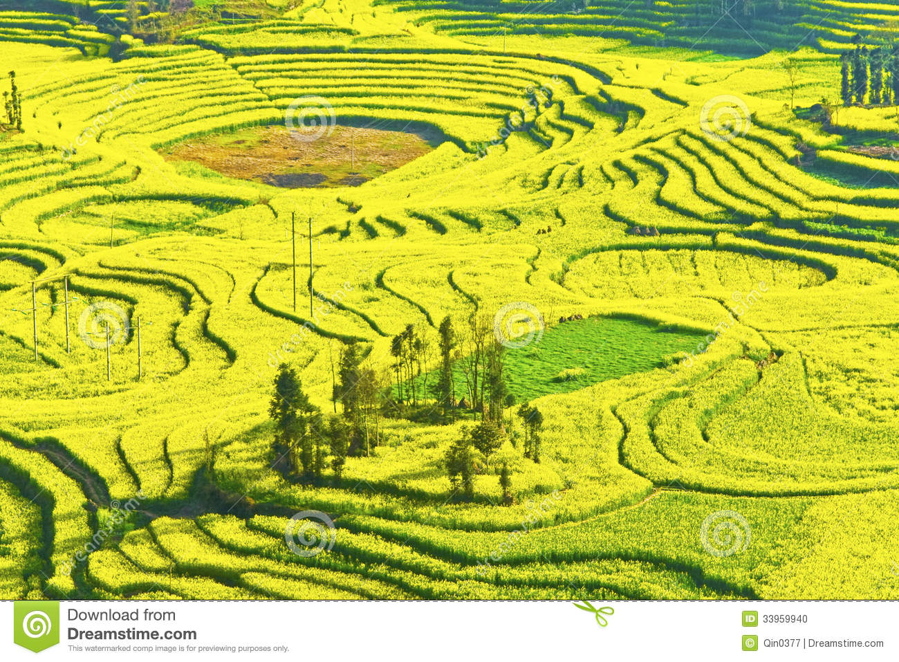 Rape In Full Bloom In Luoping County In Yunnan Province Stock Photo ...