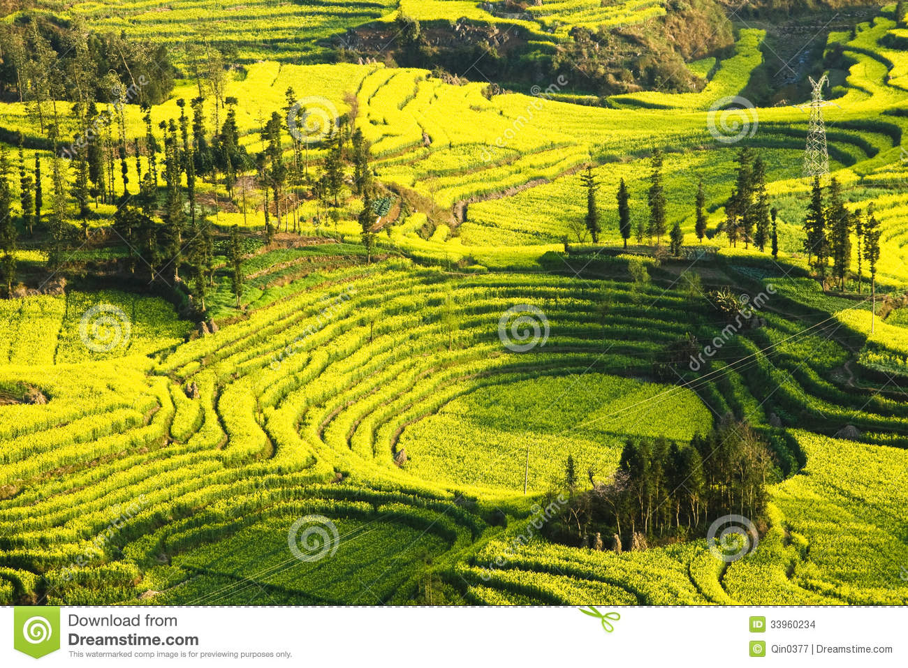 Rape In Full Bloom In Luoping County In Yunnan Province Stock Images ...