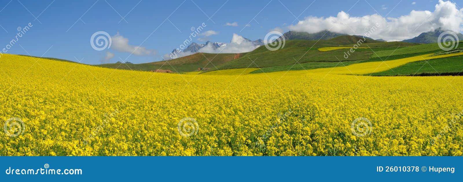 seed field under blue sky