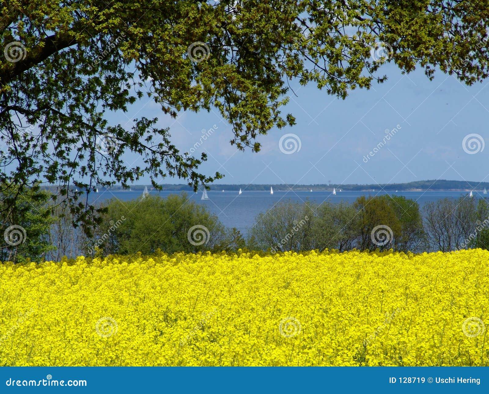 Rapefield em um fjord 2