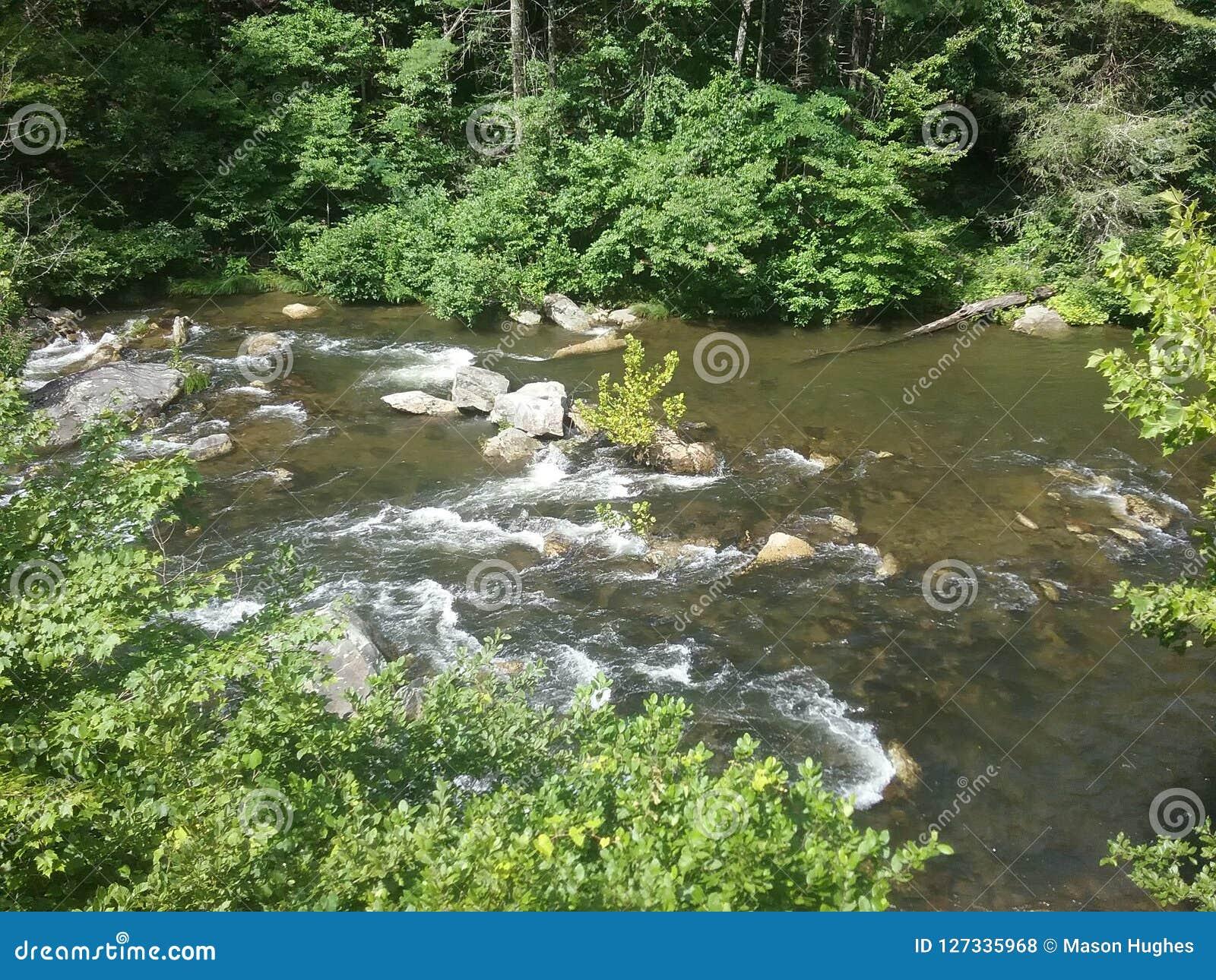 Rapide chauve de rivière