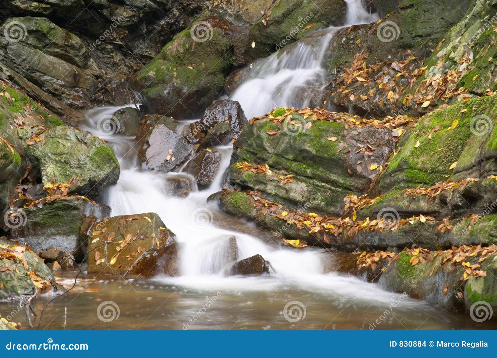 Rapids in a mountain brook