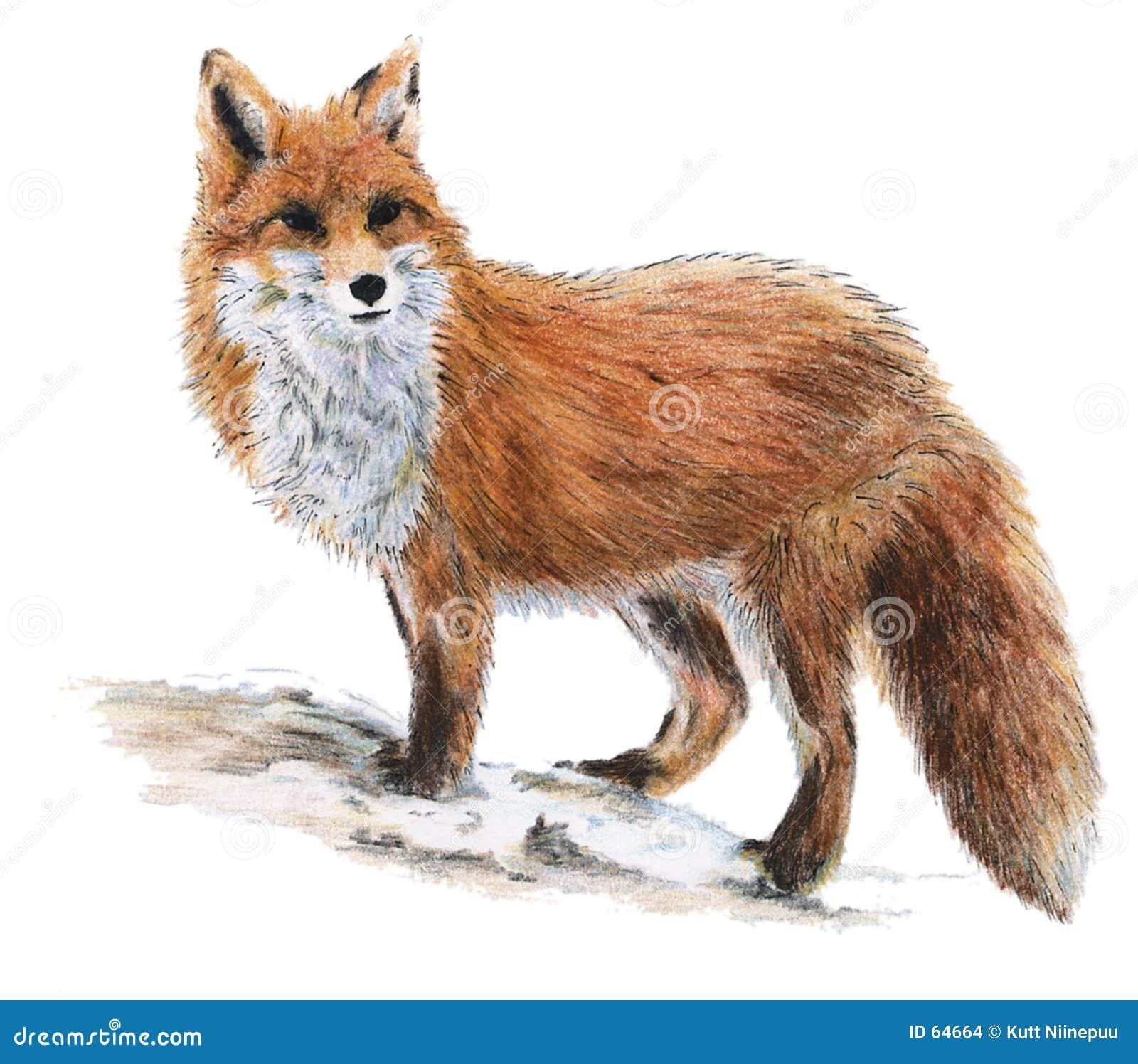 Raposa desenhada ilustra o stock imagem de raposa - Clipart renard ...