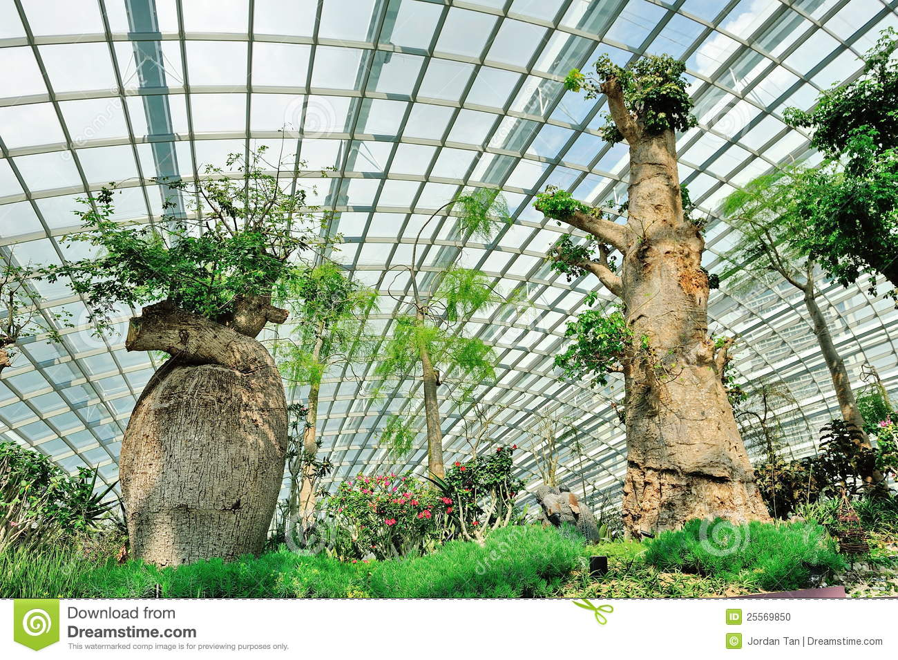 rare baobab trees in flower dome stock photo image 25569850. Black Bedroom Furniture Sets. Home Design Ideas