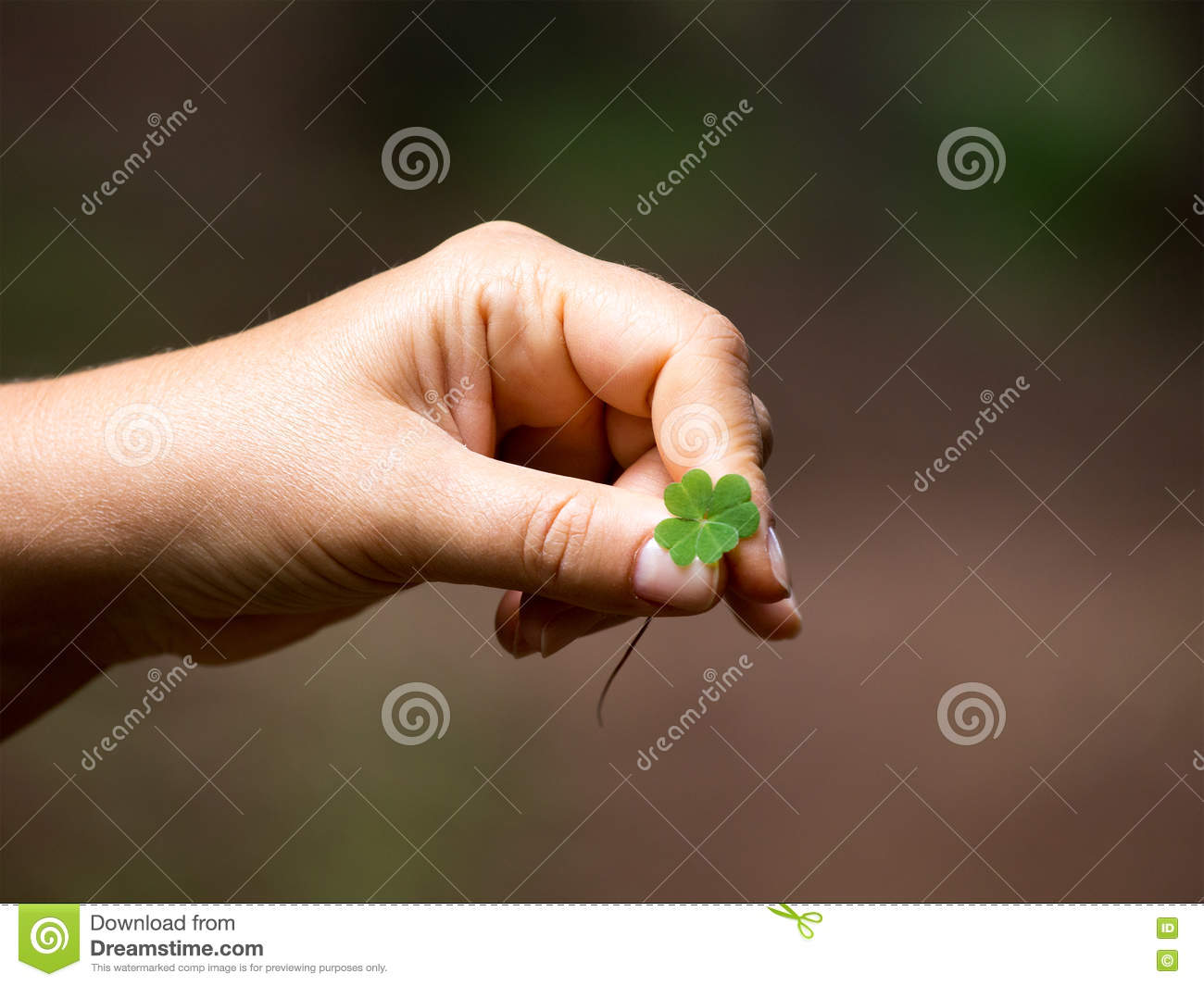 The rare find a symbol of good luck four leaves clover rhodop royalty free stock photo buycottarizona Image collections