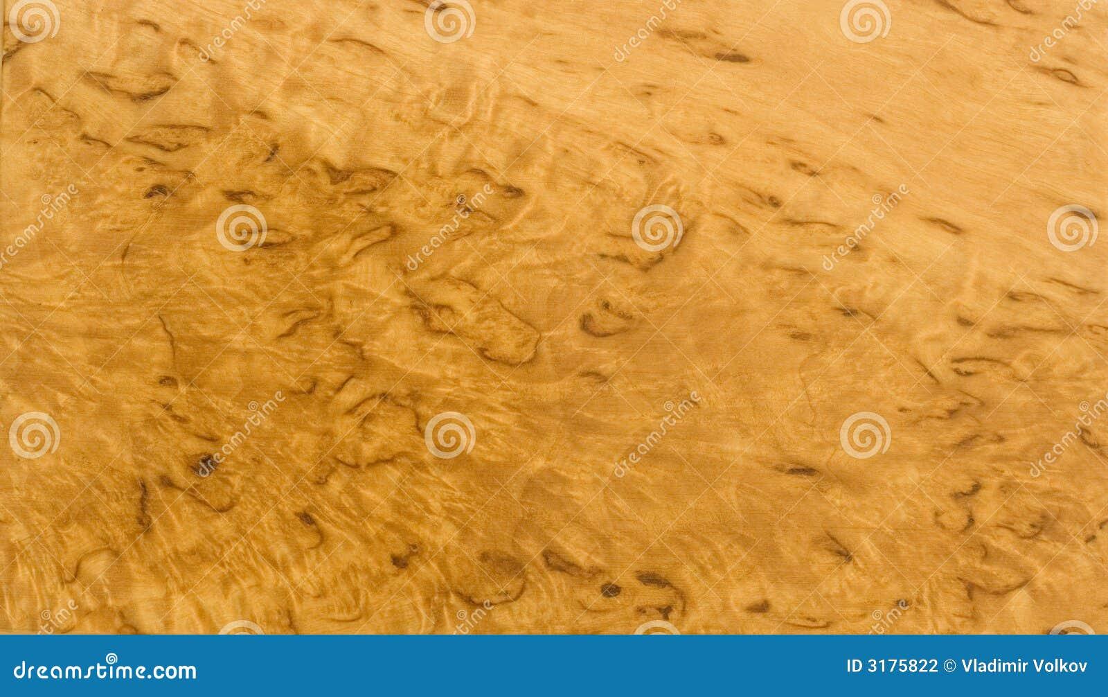 Karelian birch: description, photo 37