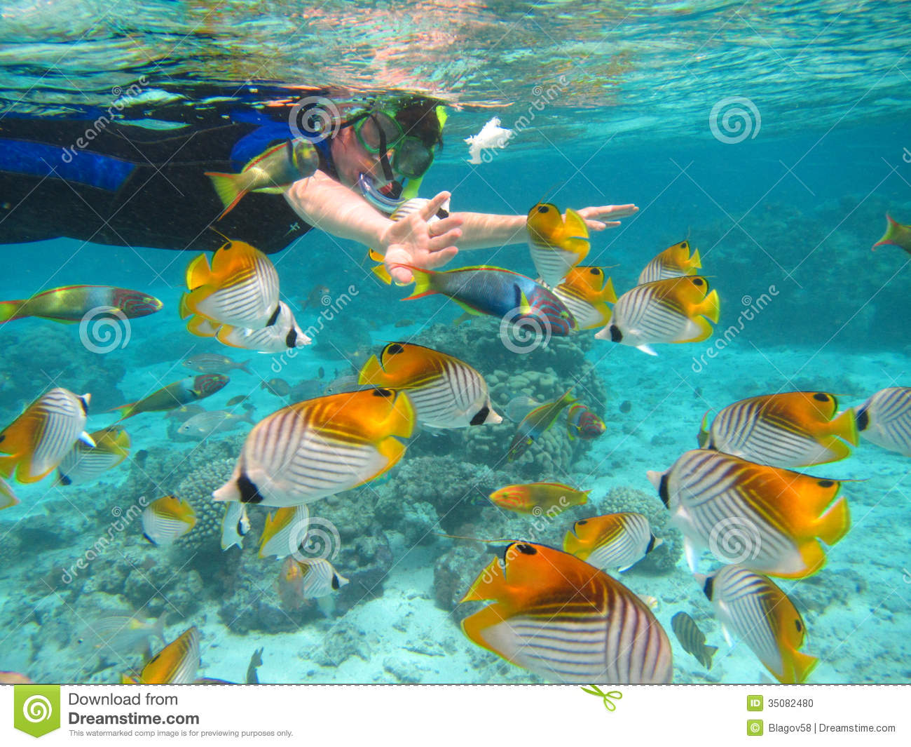 Rarotonga Cook Islands  City new picture : Snorkling in Rarotonga. Cook Islands, Oceania. South Pacific.