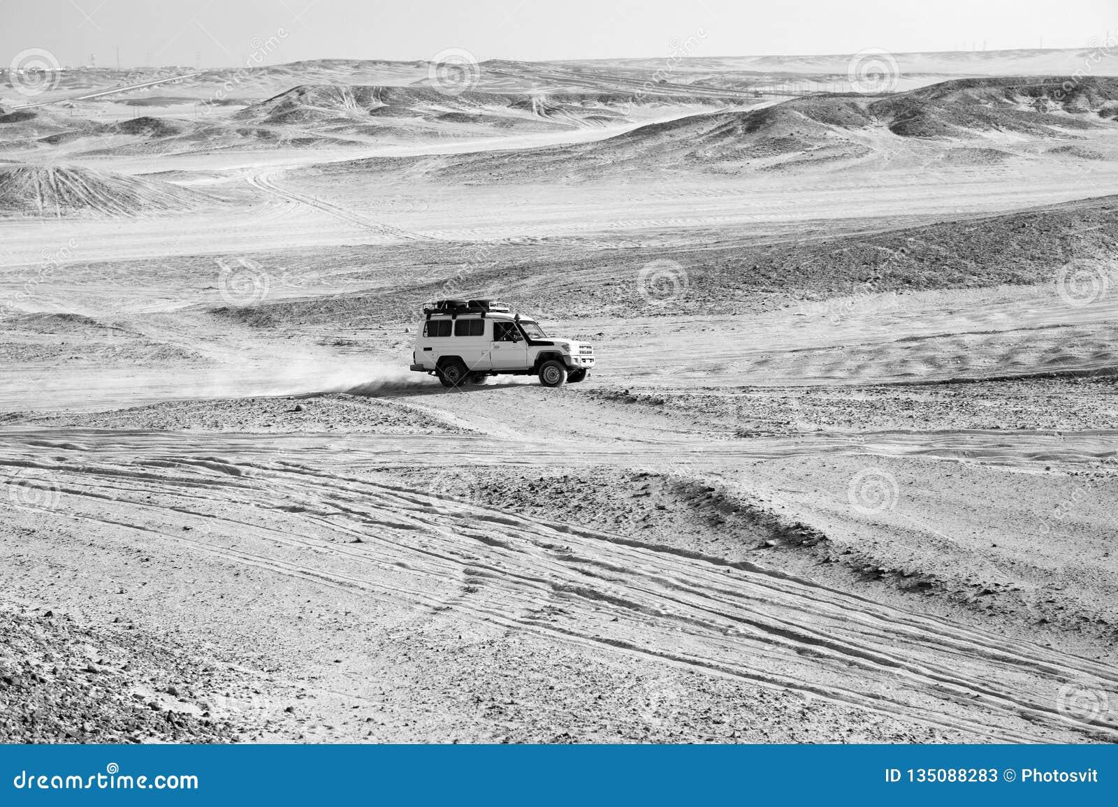 Rasa w piasek pustyni Samochodowy suv pokonuje piasek diun przeszkody Turniejowa bieżna wyzwanie pustynia Samochód jedzie offroad