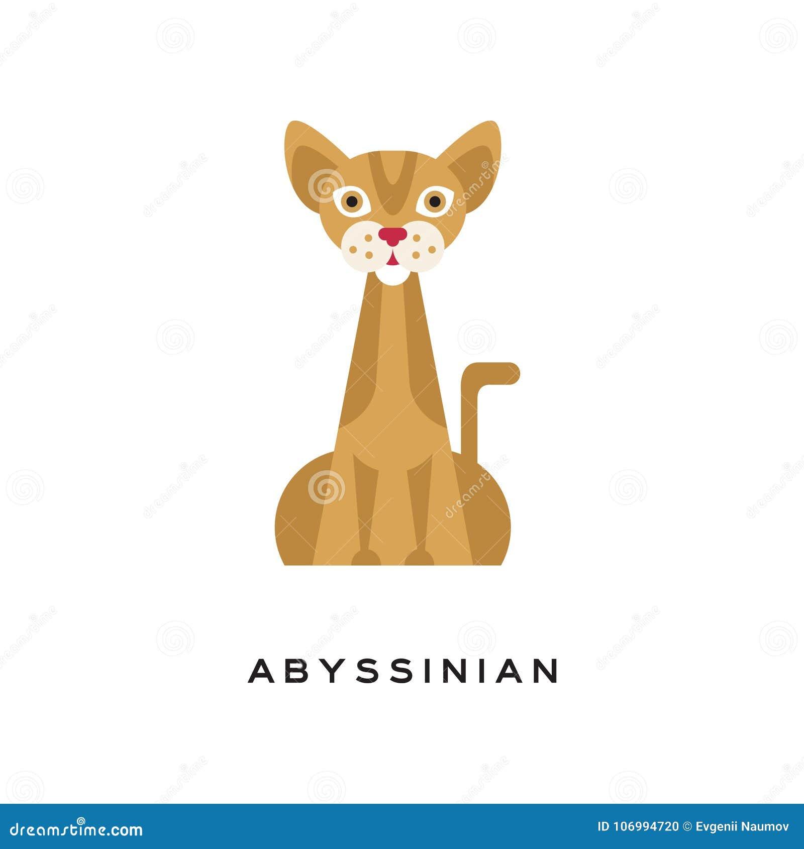 Rasechte Abyssinian-kat Elegante kortharige katachtig met bruine gestreepte katlaag, spierlichaam, grote, gerichte oren en rood