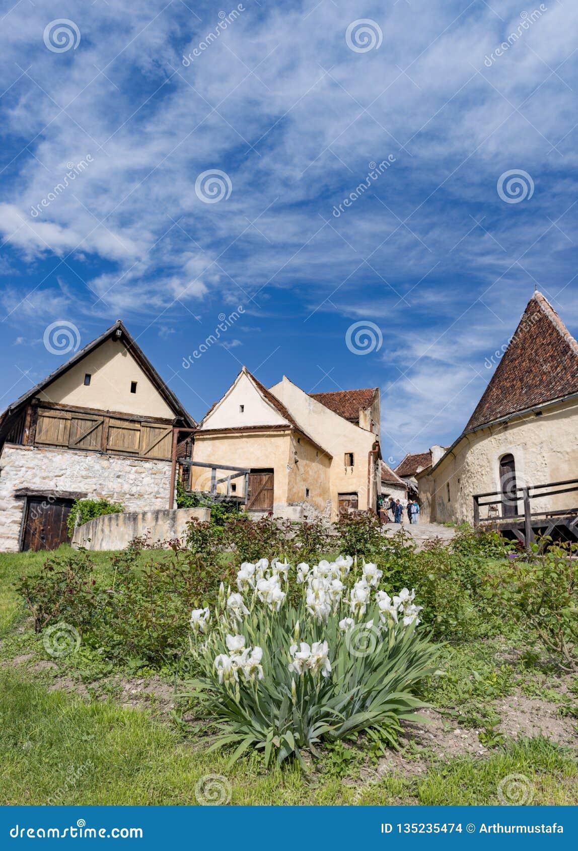 Rasnov,罗马尼亚- 2017年5月:Rasnov城堡内在countryard的春天视图,在布拉索夫县(罗马尼亚),有开花的白色的