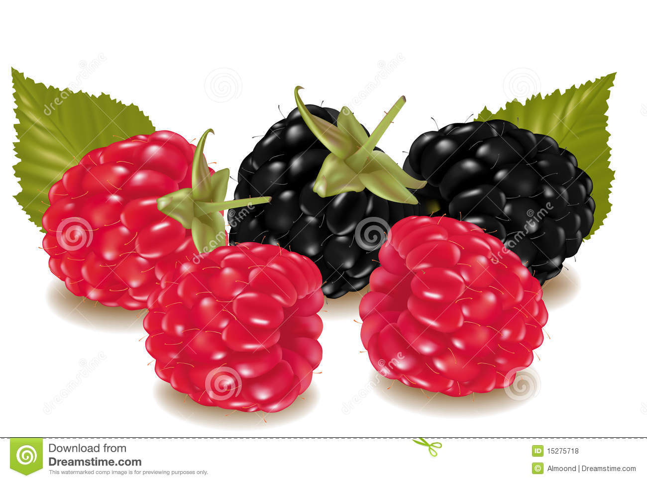 clip art fresh raspberries