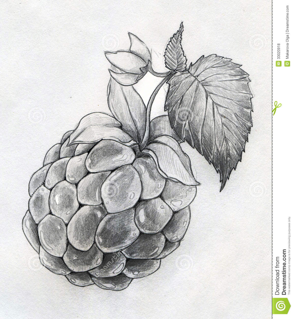Hand drawn ripe raspberry with leaf and flower pencil sketch