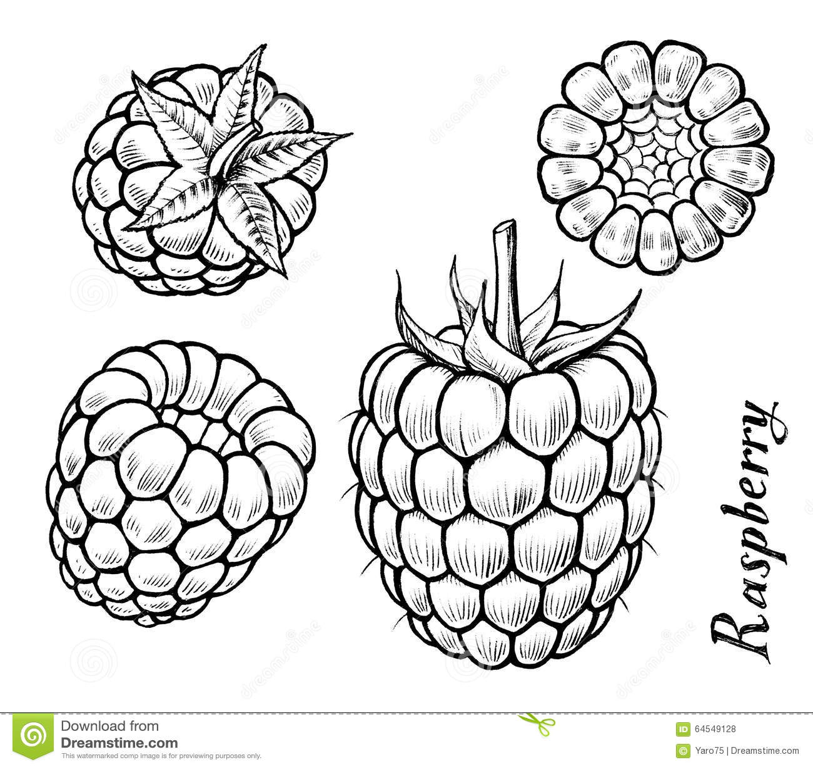 Raspberry Stock Illustration - Image: 64549128