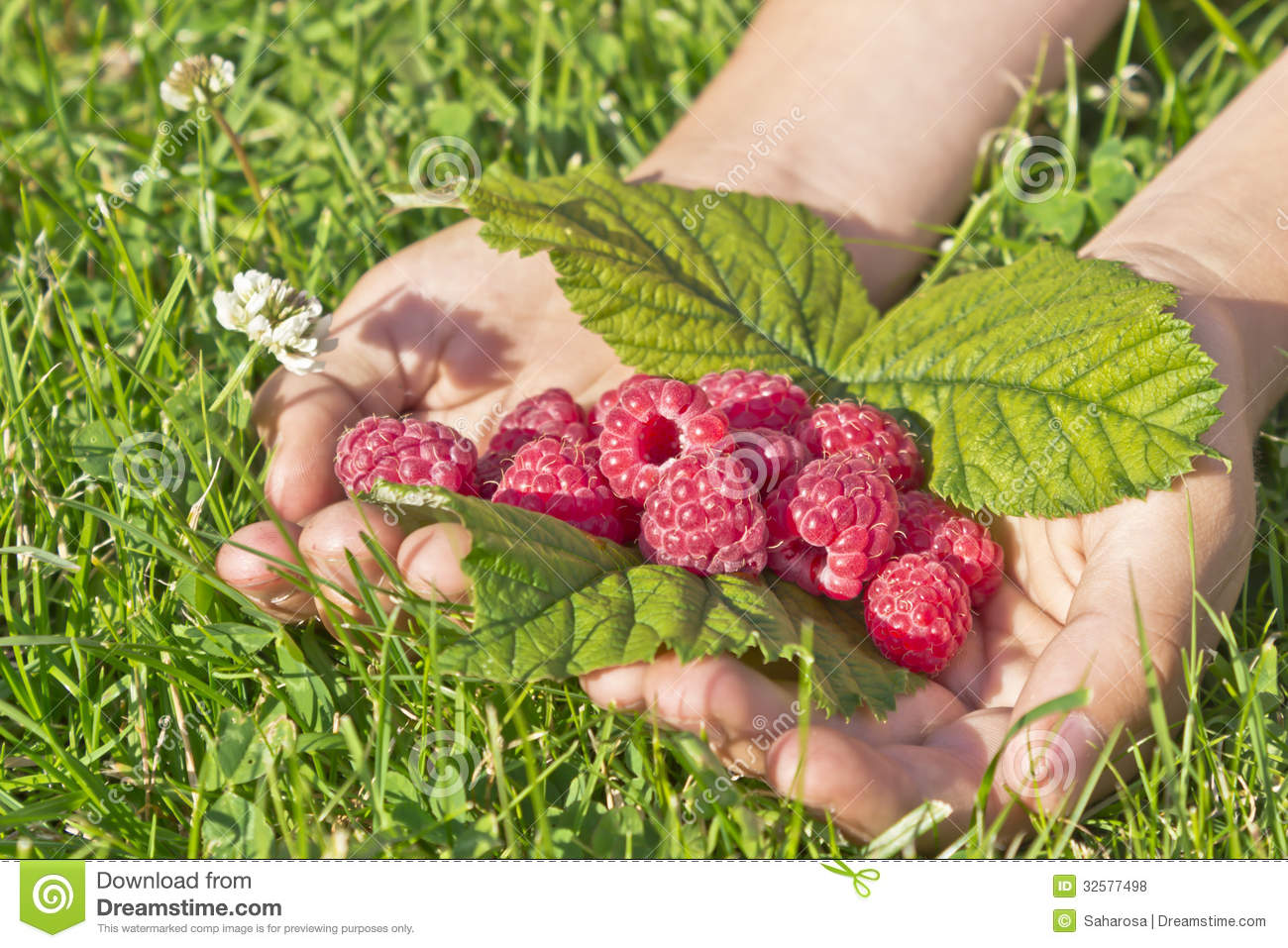 http://thumbs.dreamstime.com/z/raspberry-hands-beautiful-ripe-raspberries-children-s-32577498.jpg
