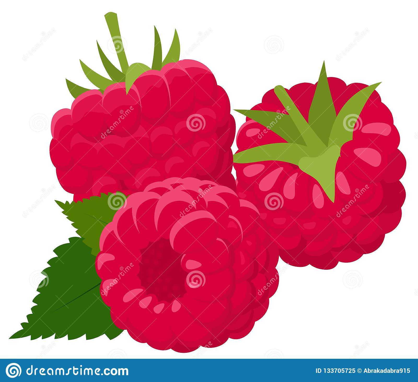 Raspberry isolated on white background. Raspberries. Forest berry. Vector Illustration