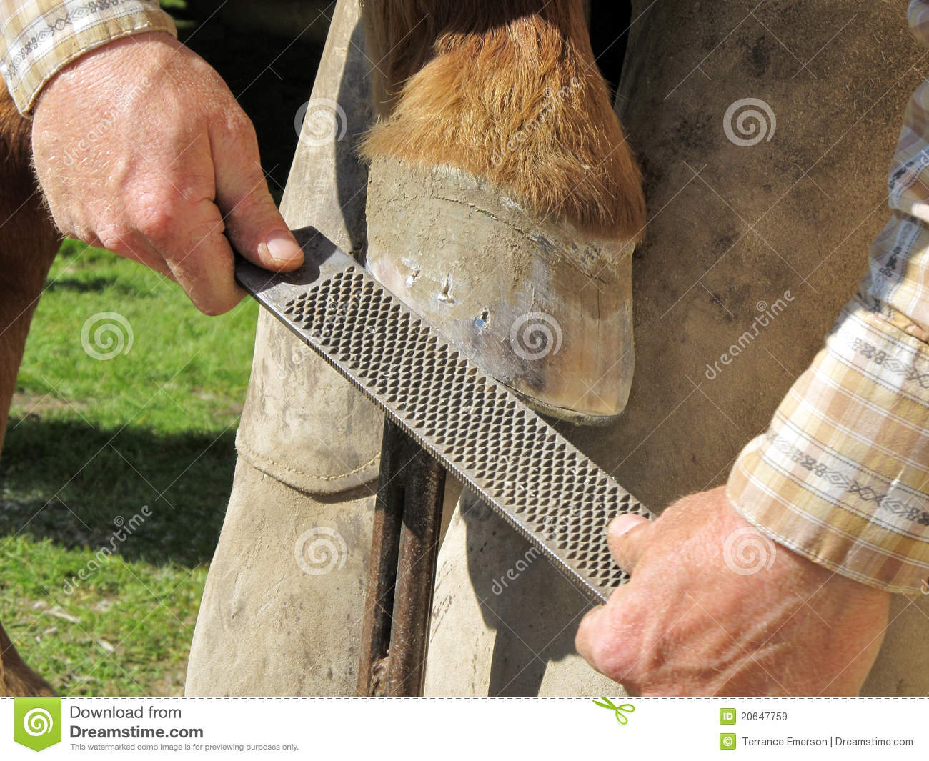 rasping a horseshoe and hoof royalty free stock images Rodeo Line Art Free Texas Rodeo Clip Art