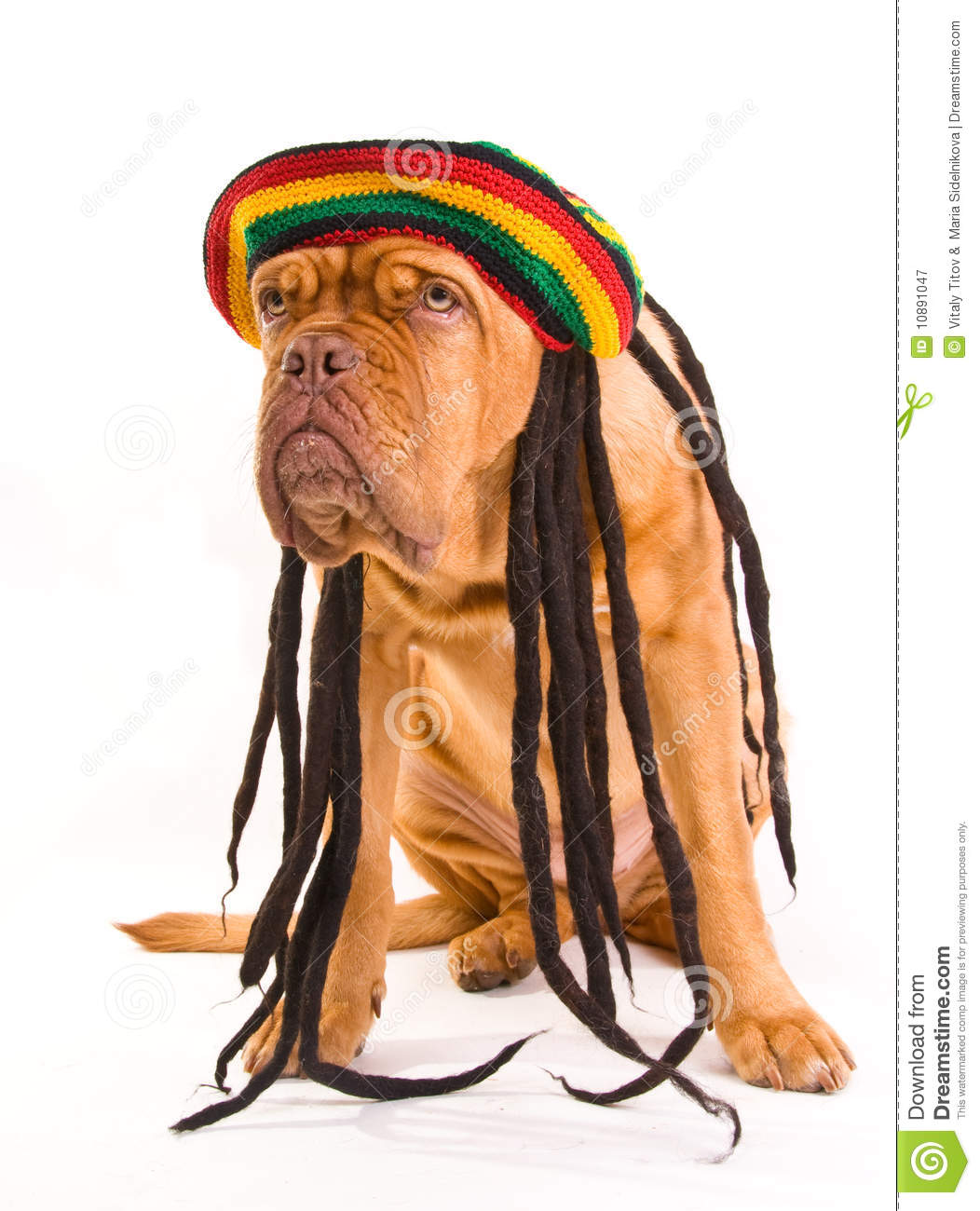 Rastafarian 2: Rastafarian Hat Dog Royalty Free Stock Photography
